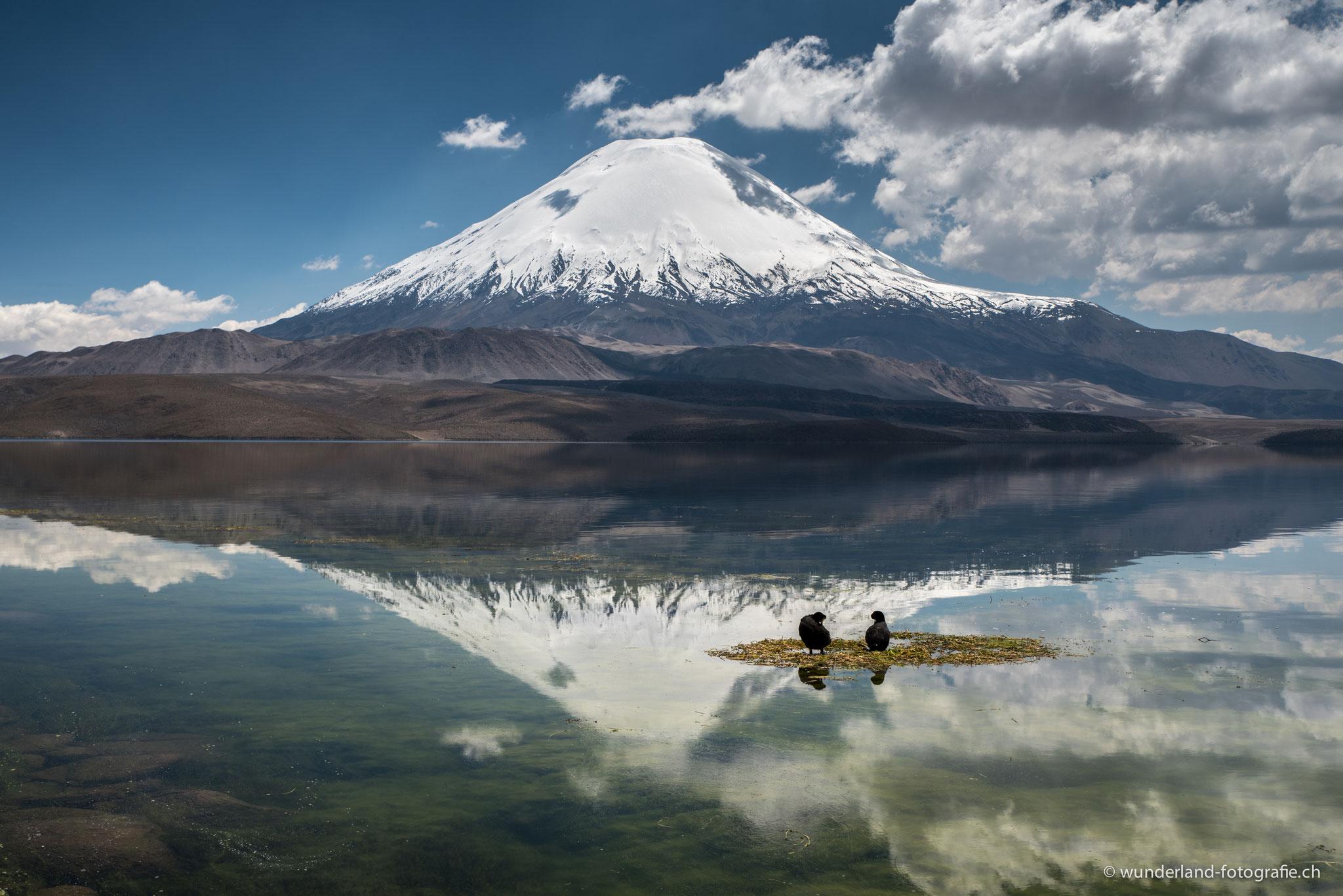 Laguna Chungará mit Blick auf dem Vulkan Parinacota
