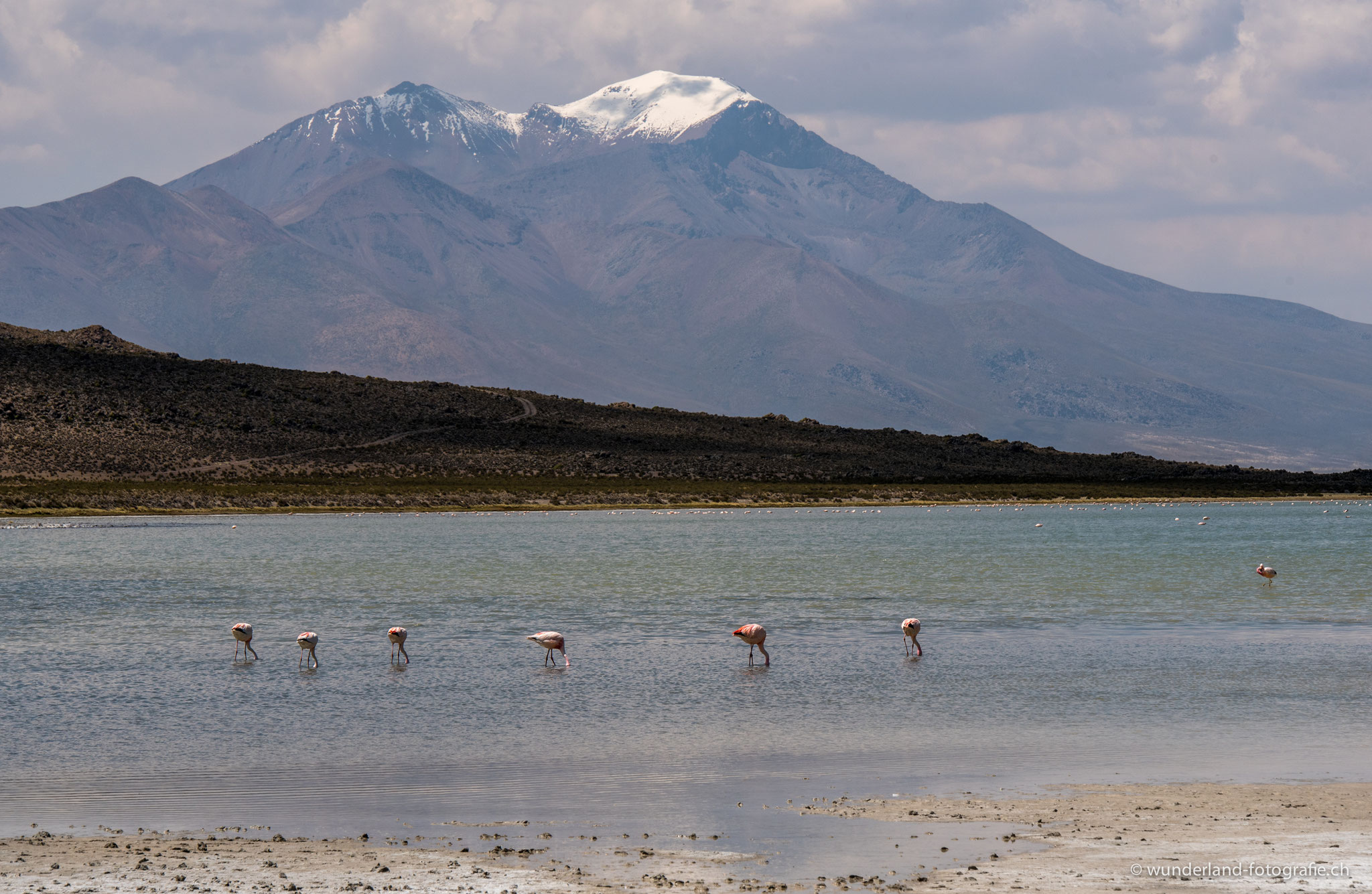 Flamingos in der Salar de Surire