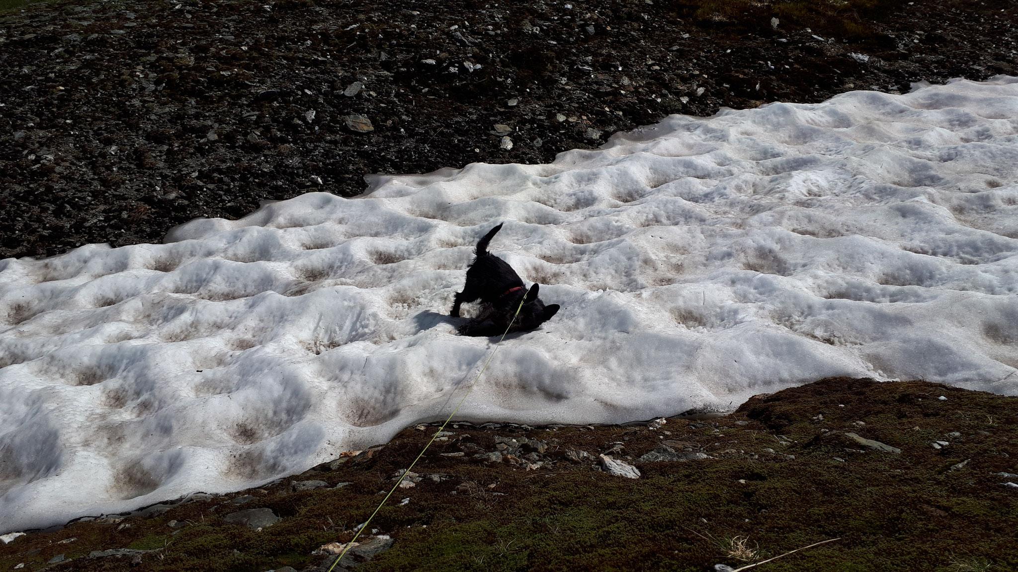 ...jedes Schneefeld ist willkommen...