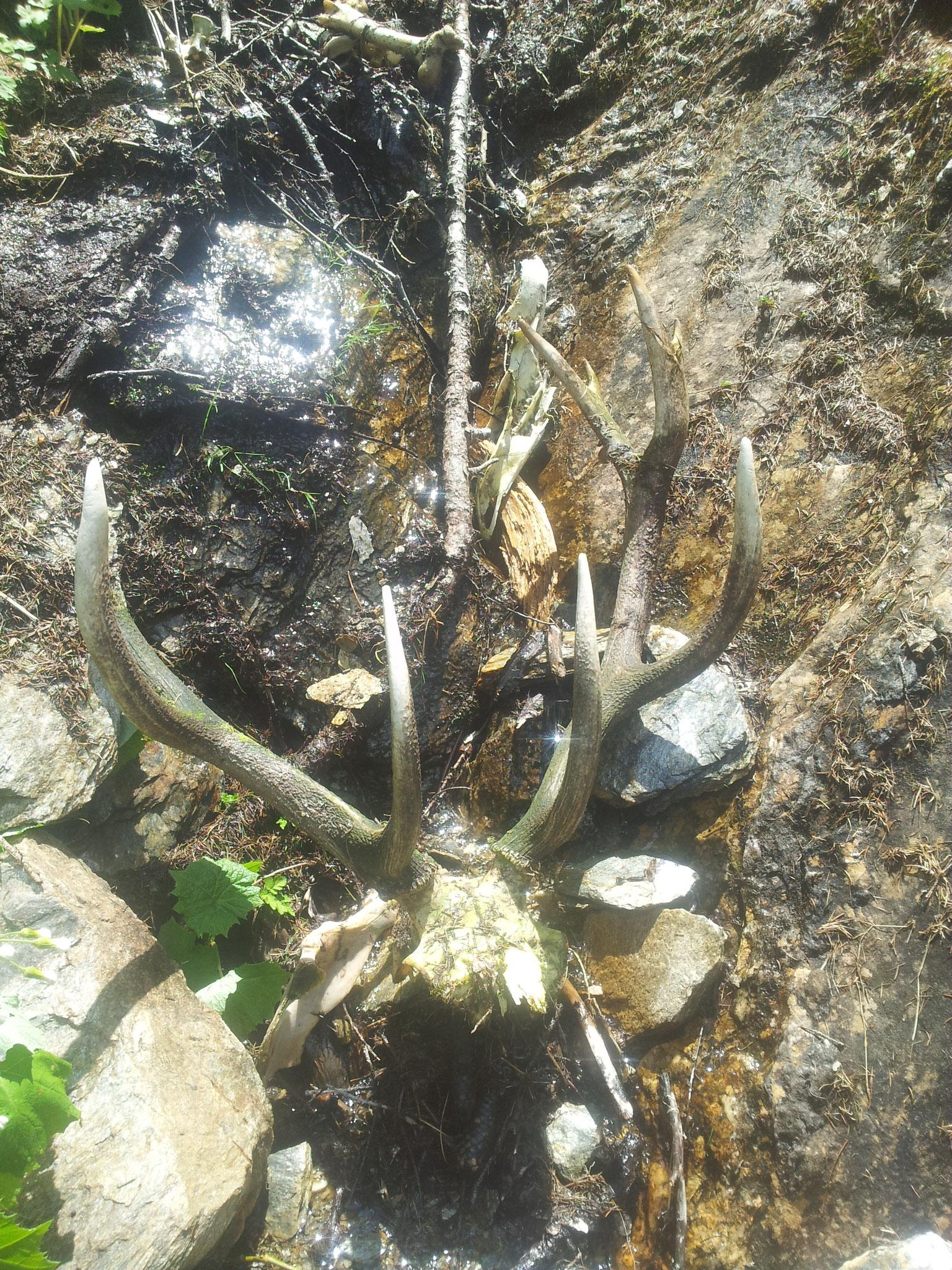 .... wenn man weiß wie steil und rutschig es in der Gegend sein kann, versteht man warum der Hirsch da gelandet ist....