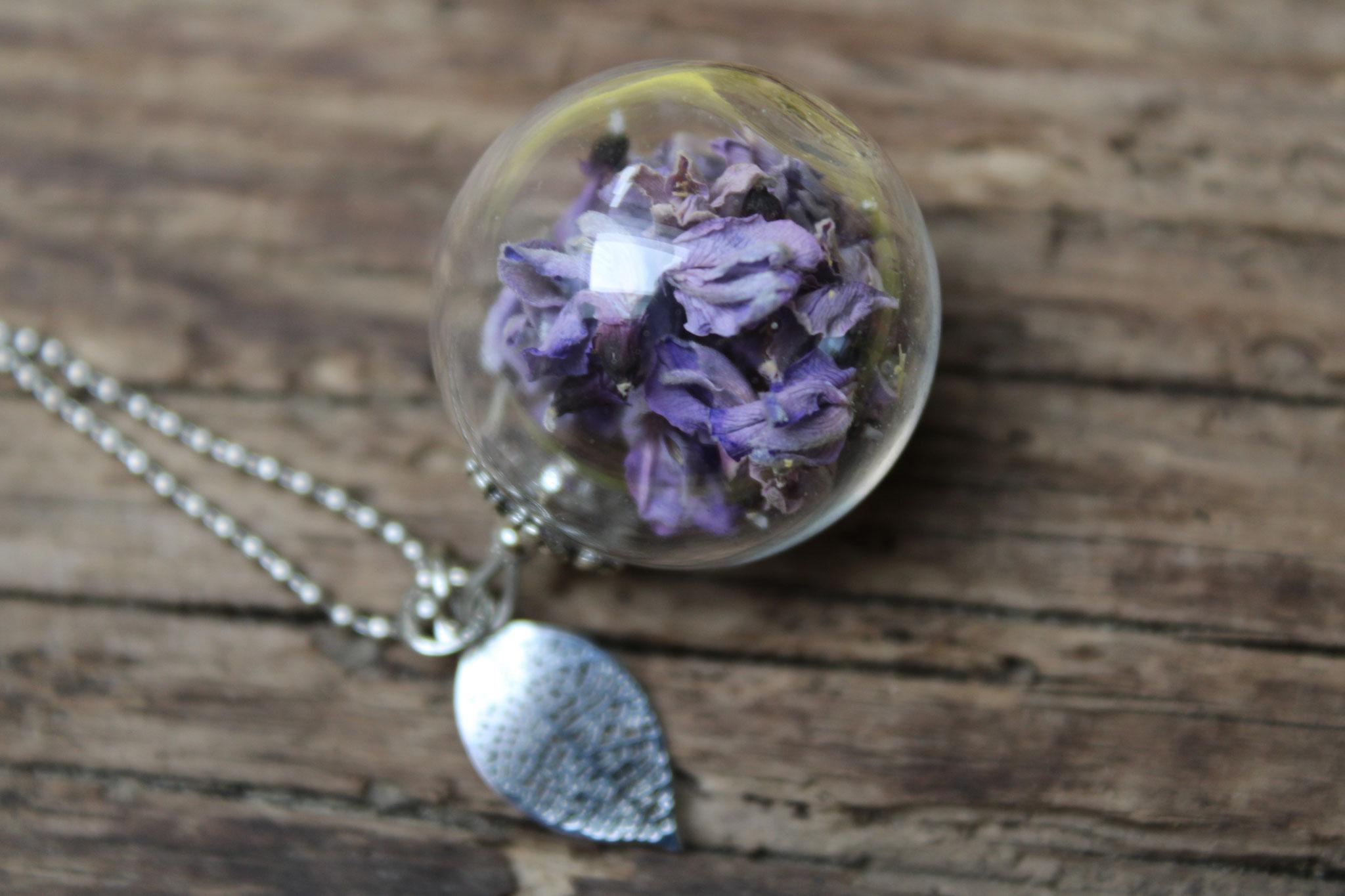 Ginster lila
