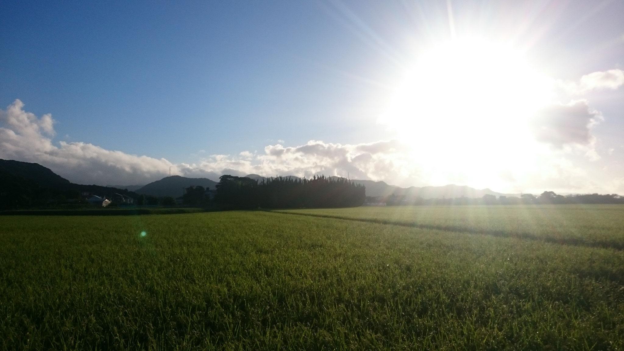 朝早く東の空