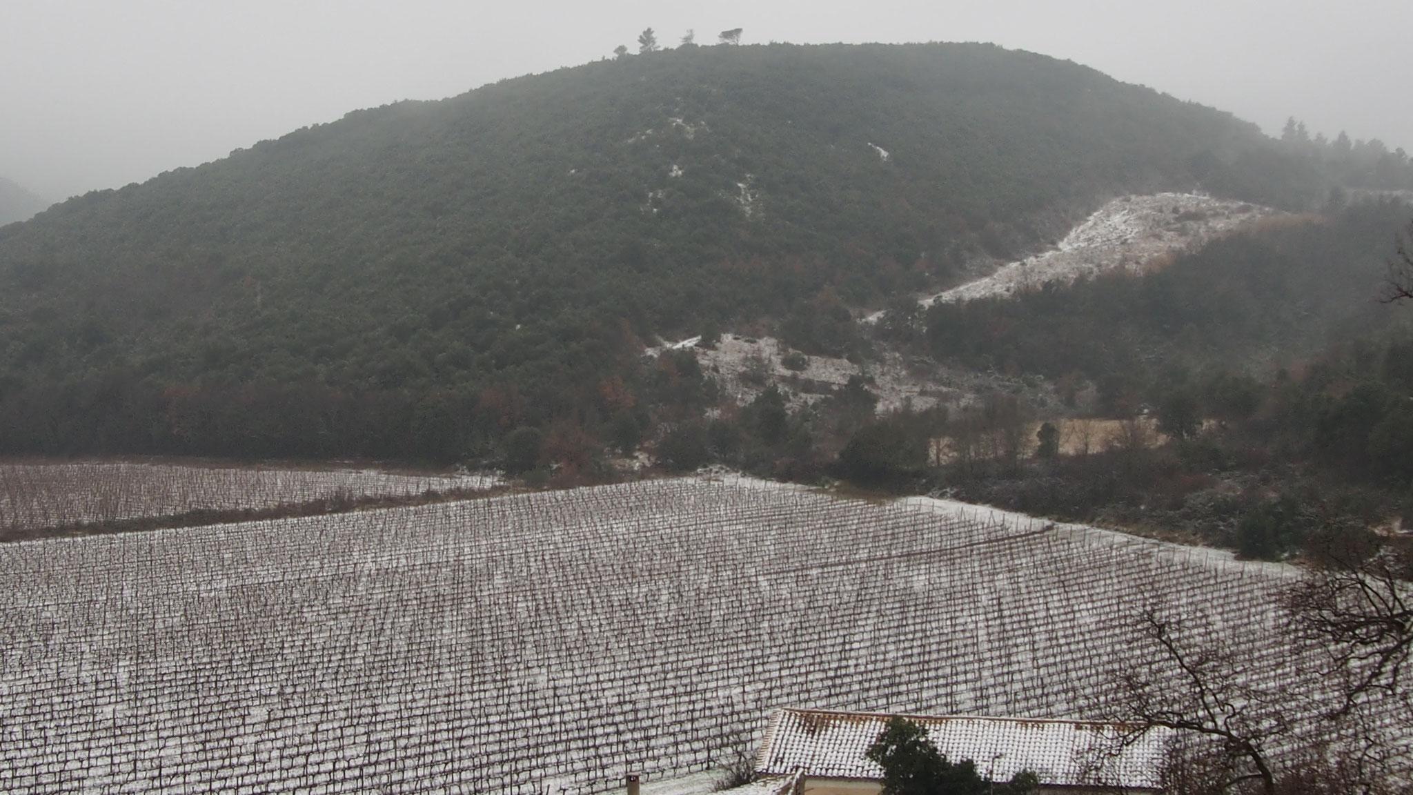 les vignes de Saint Jean de Buèges et en arrière plan, la colline du mas de la Bau sous la neige