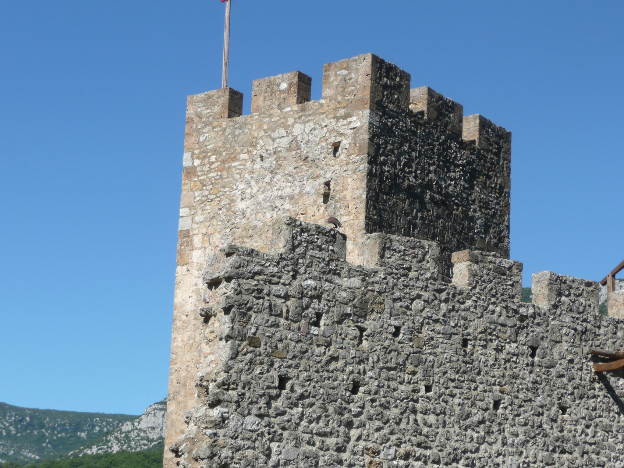 le fauconnier et ses oiseaux au château de Baulx