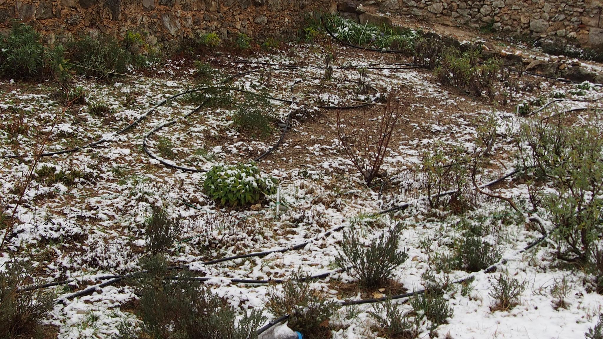 Le carré des Sauges sous un blanc manteau
