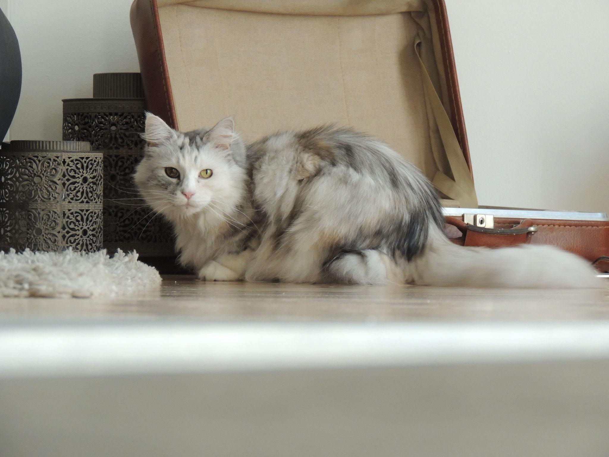 Aimee - meine vom Kunden übernommene Katze