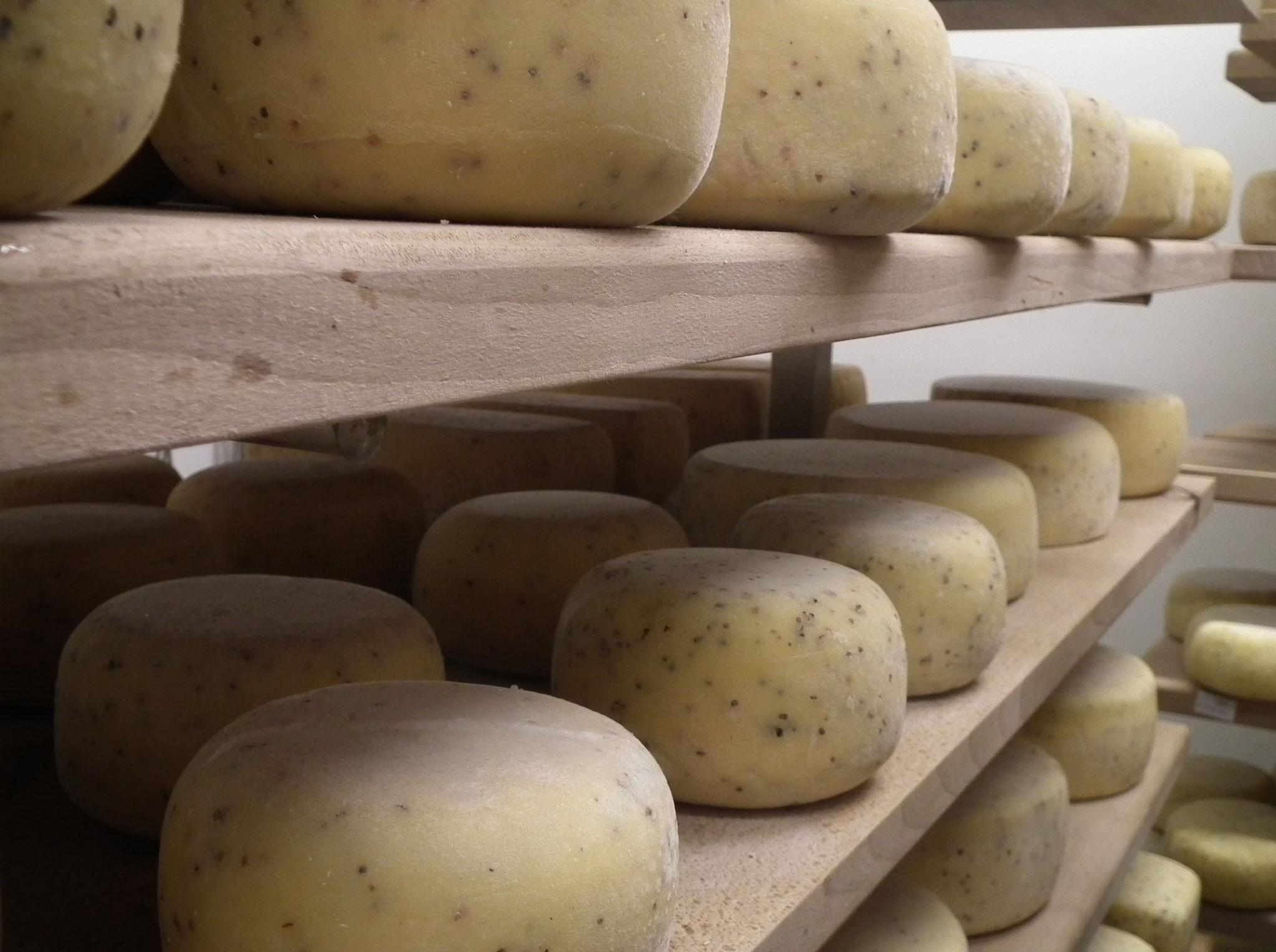La Ferme du Bel'Ozo - fromages au lait cru de vache