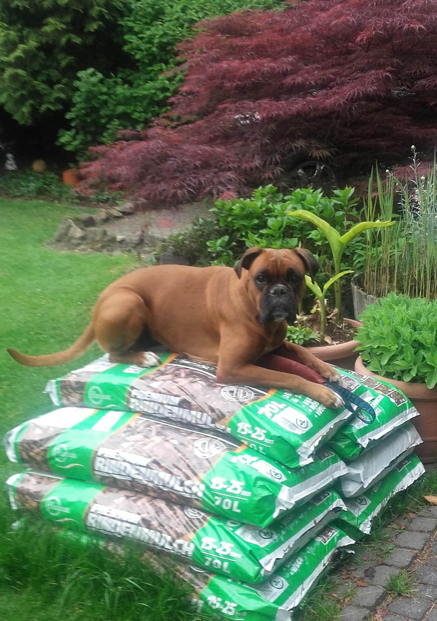 ...da kann man gut bei der Gartenarbeit zuschauen :)