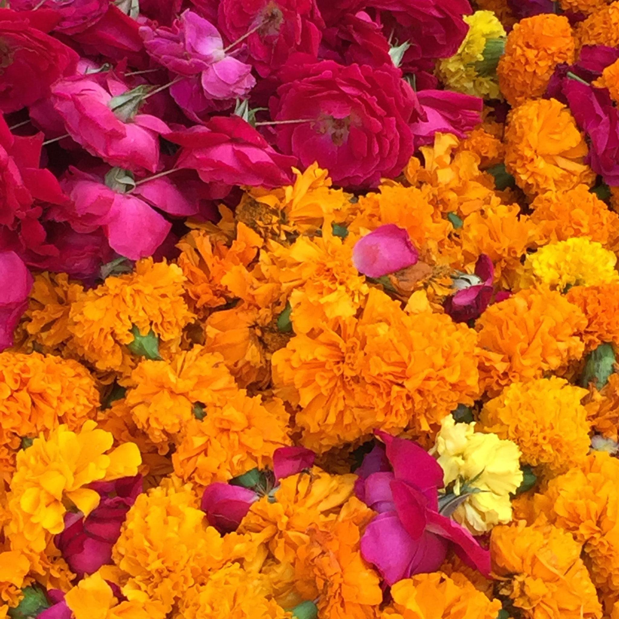 Holi Flowers