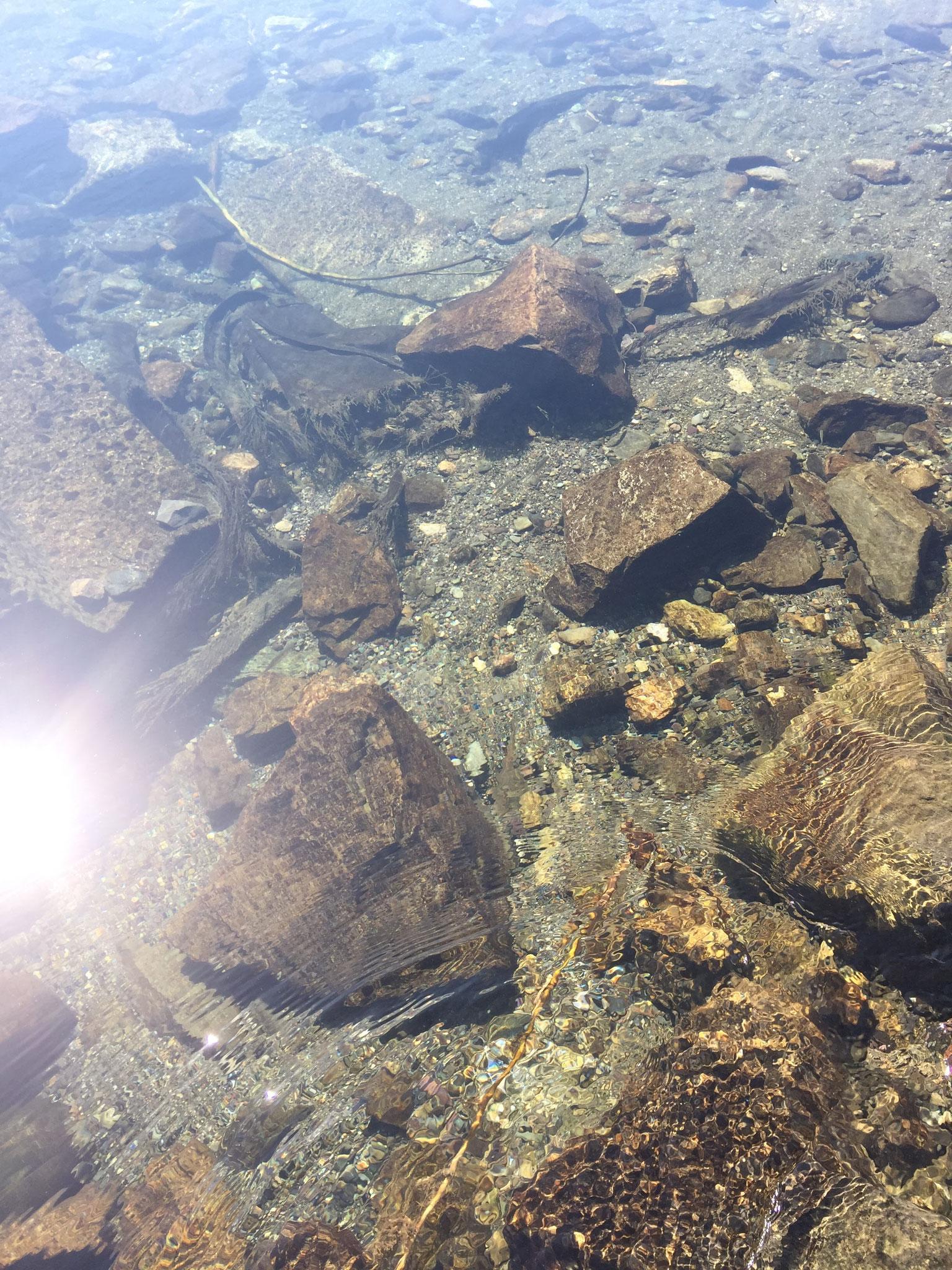 澄んだ水!右上にお魚も。水が本当に澄んでいて綺麗です!
