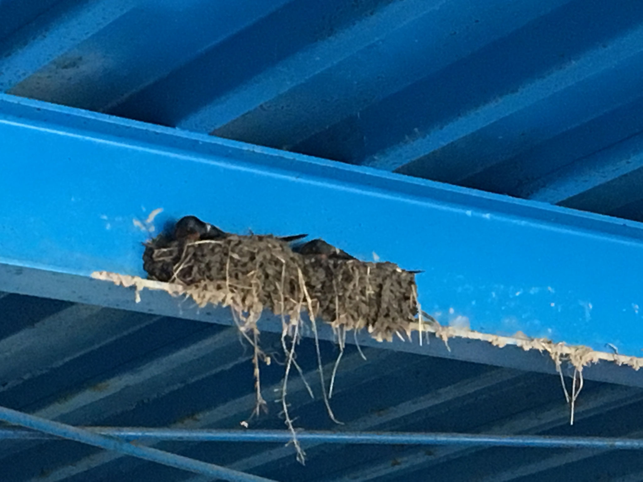 春:燕も夫婦別室の時代です。