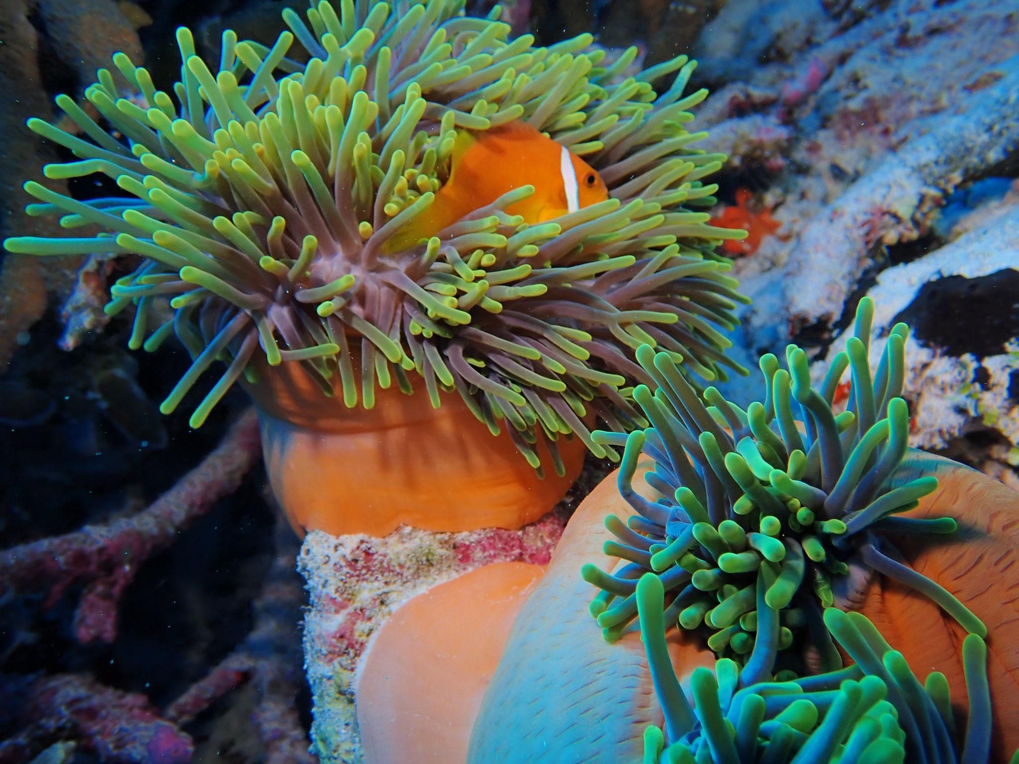Nemo entdecken     |Foto: Jürgen Seitz