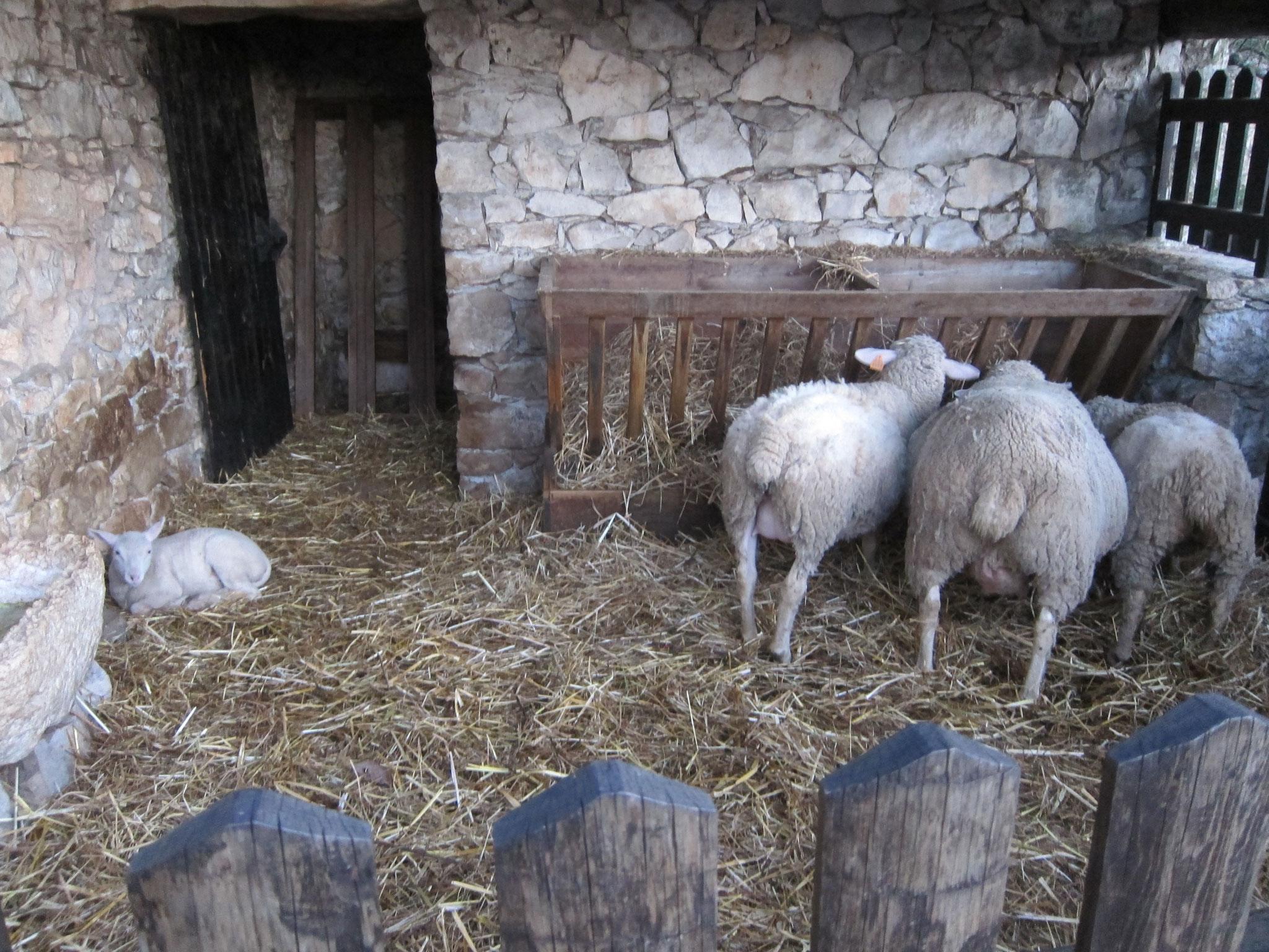 家畜小屋も修復され、当時のままに