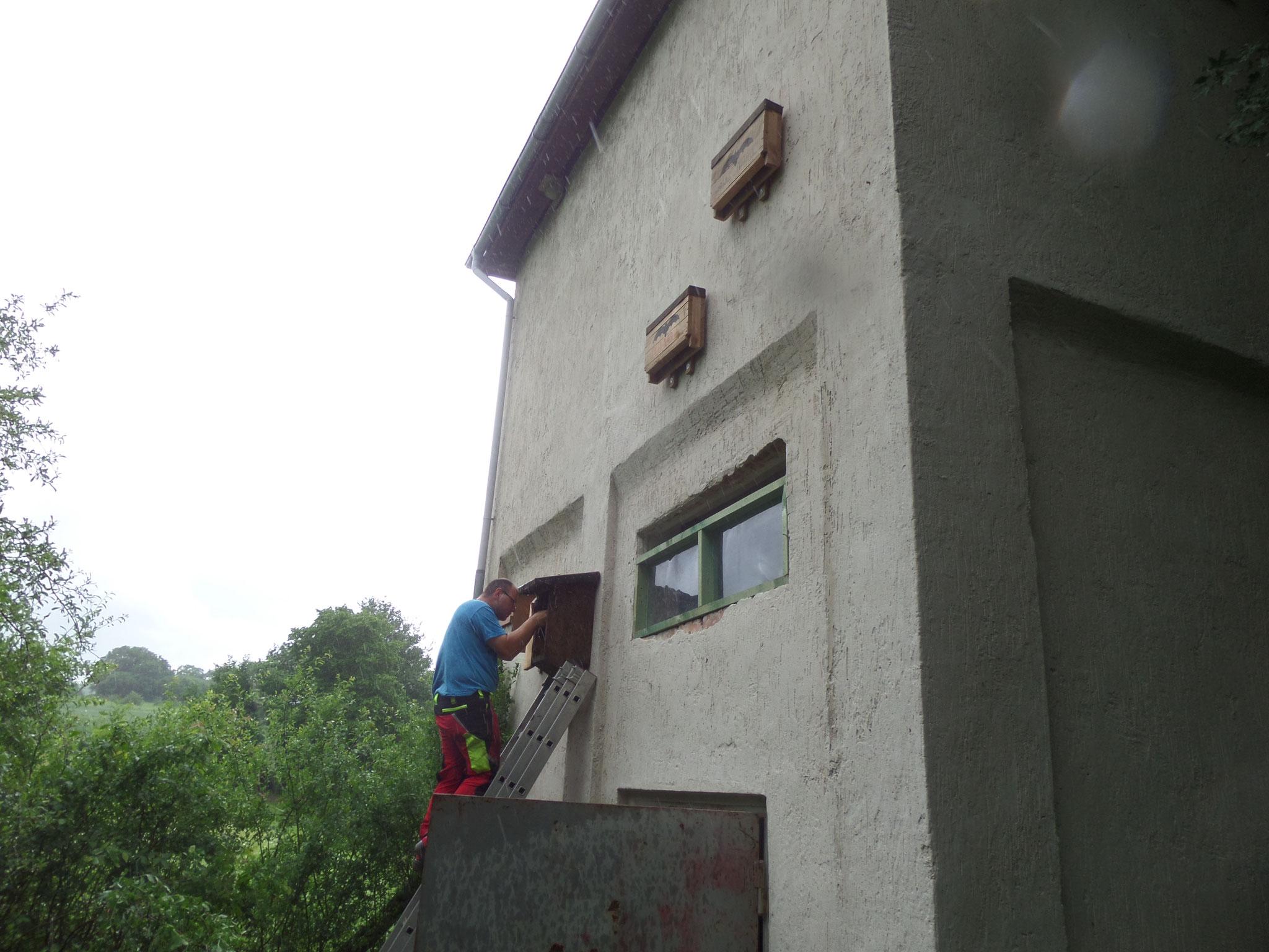 Montage eines Hornissen-Kastens