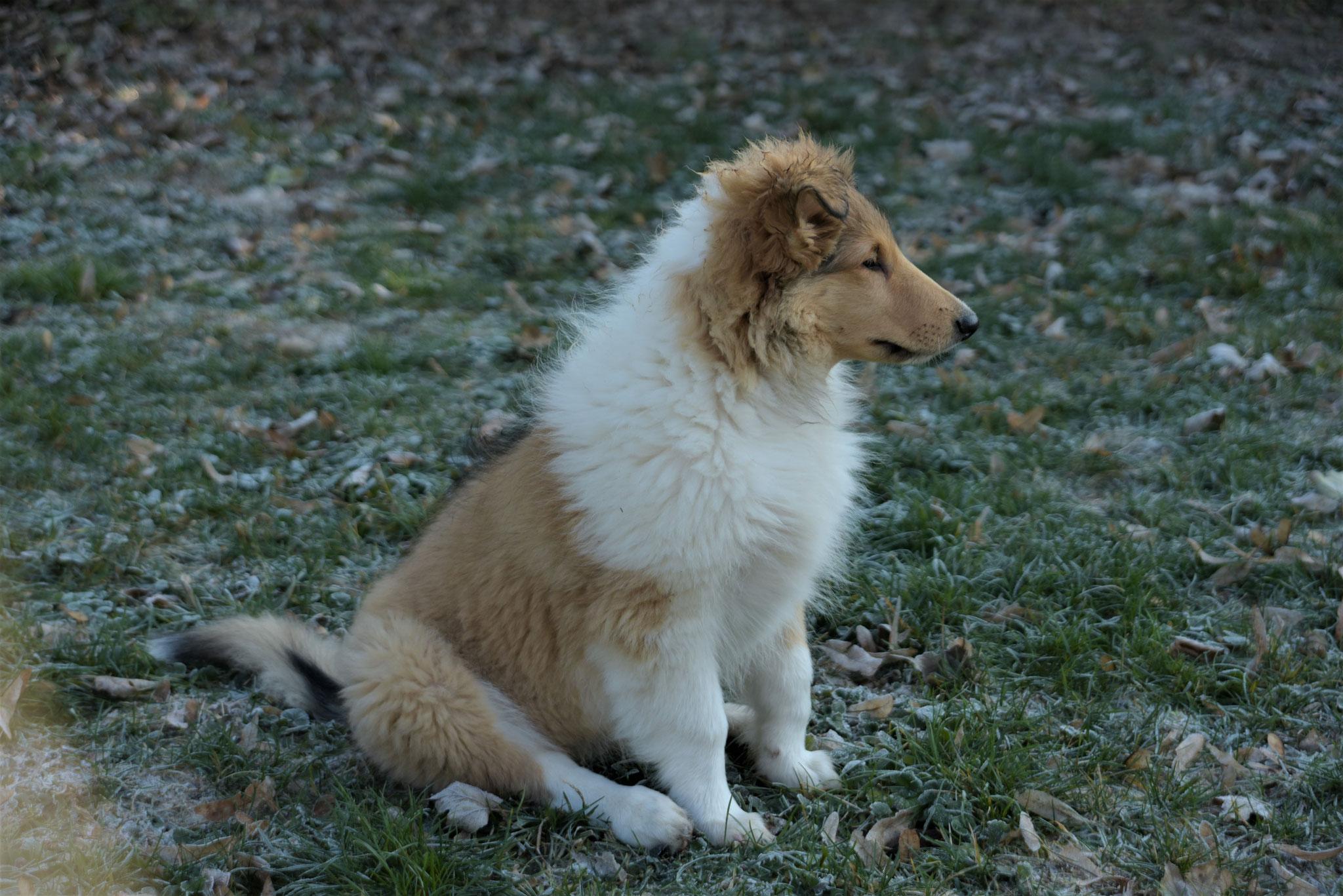 Clara vom Grafenhaus 3 Monate alt