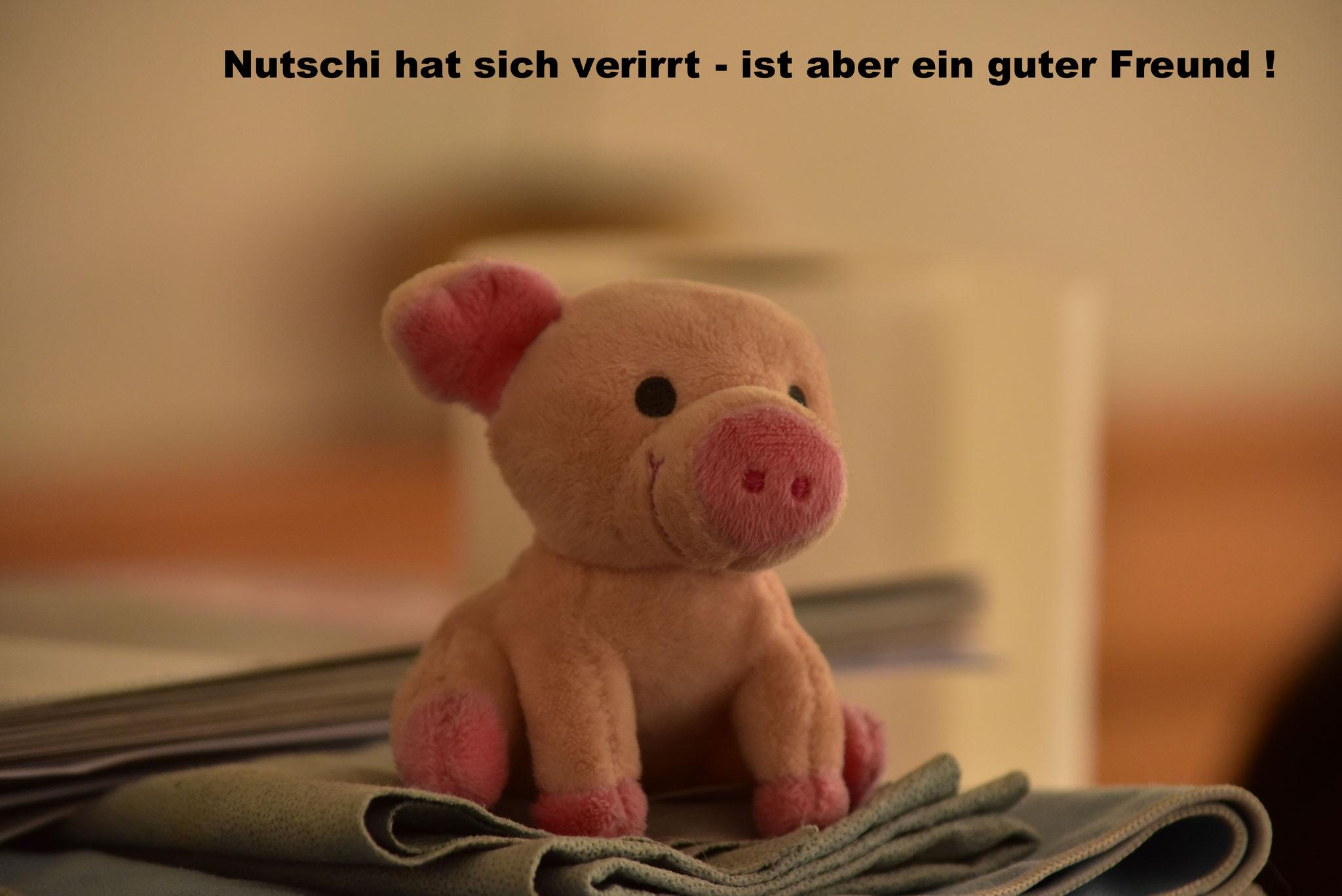 Nutschi hat sich verirrt - ist aber ein guter Freund der Grafenhauser !