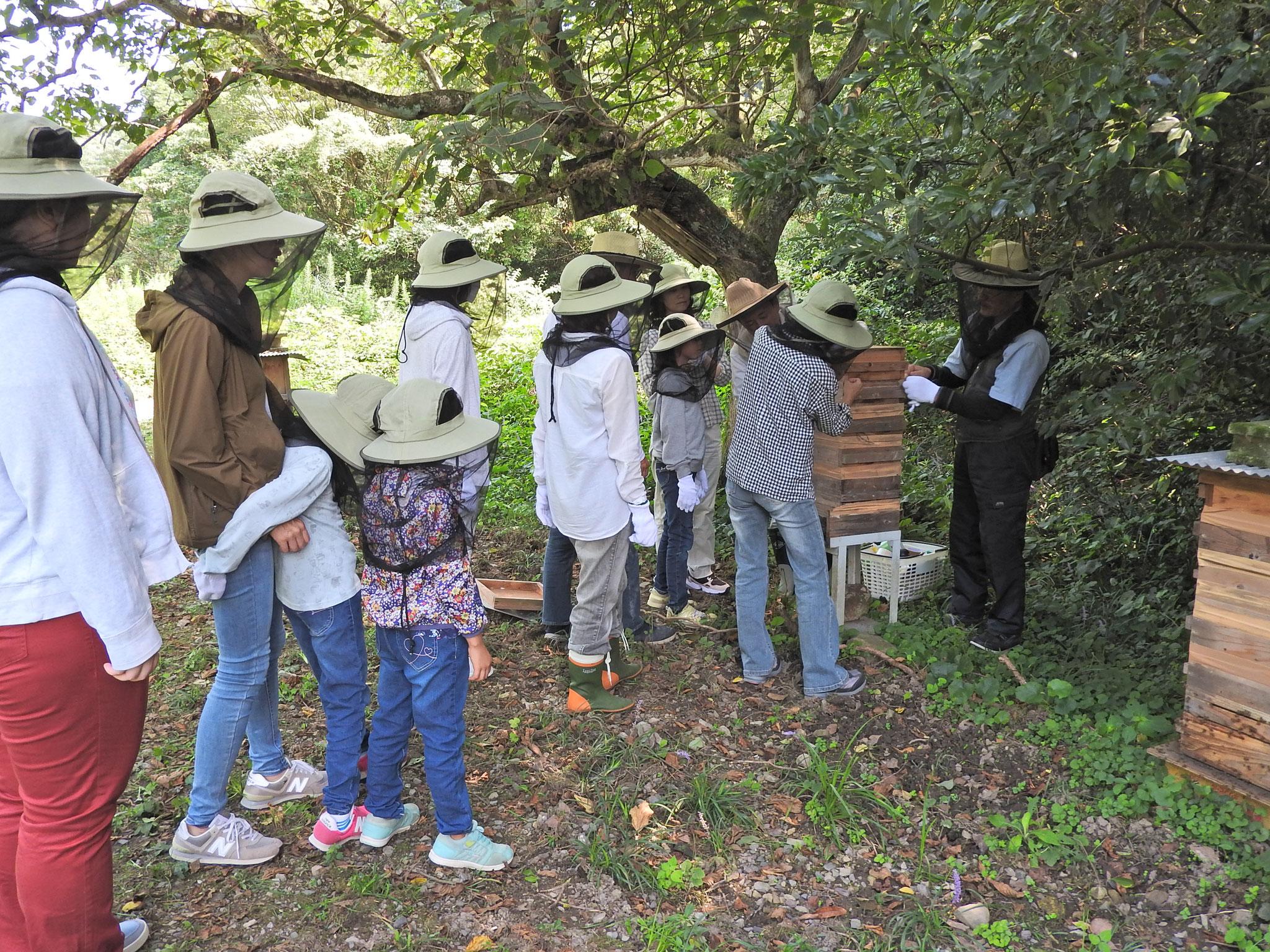ミツバチプロジェクトの様子