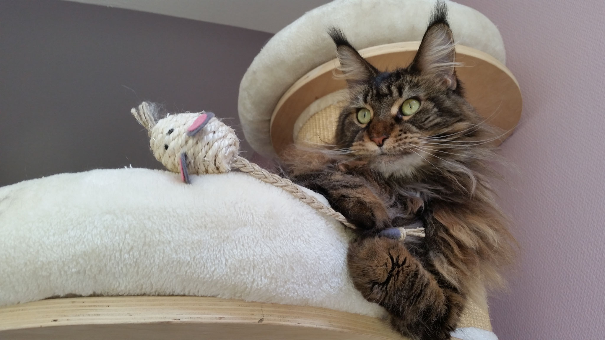 Ganz majestätisch , mit Mäuschen.