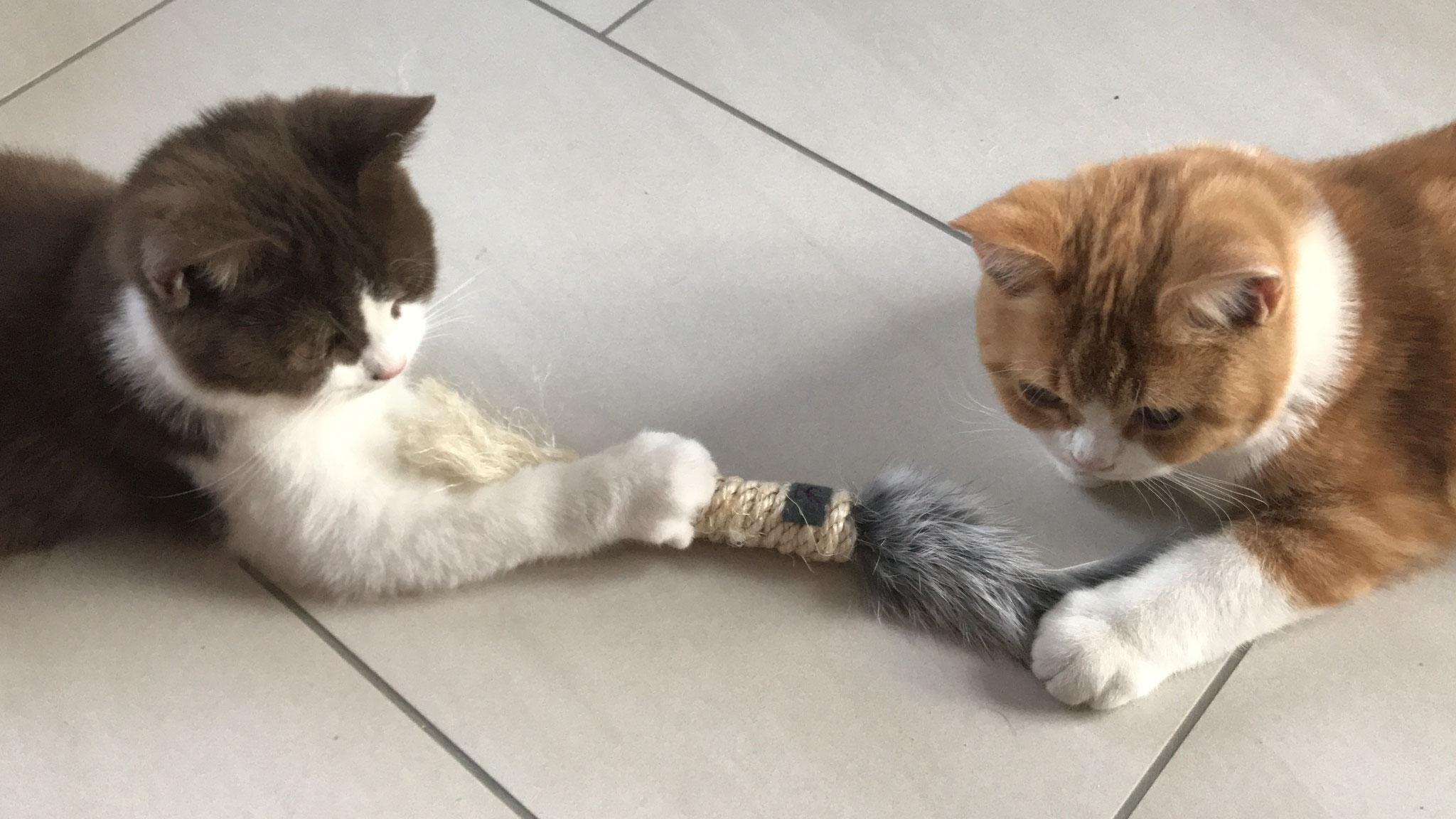 """""""Ach komm schon, eine kannst du abgeben."""""""