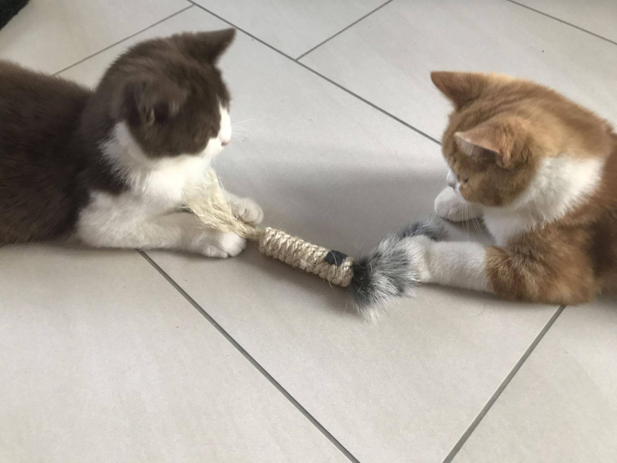 """""""Naja, Vielleicht können wir doch zusammen spielen."""""""