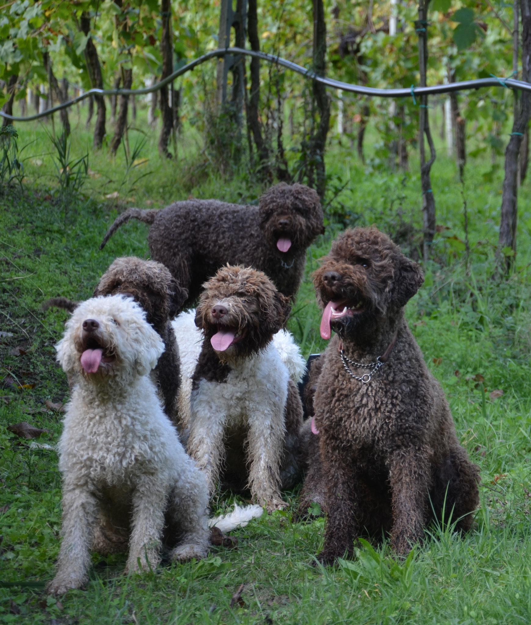 Lagotto Truffle Dogs: Terra Incognita Lagotto Romagnolo Home