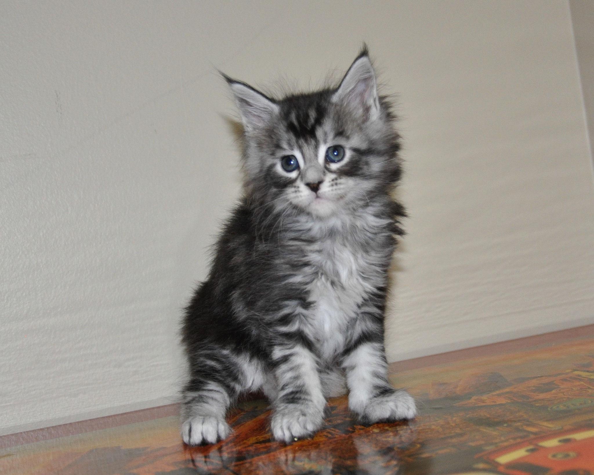 Eva, 5 weeks