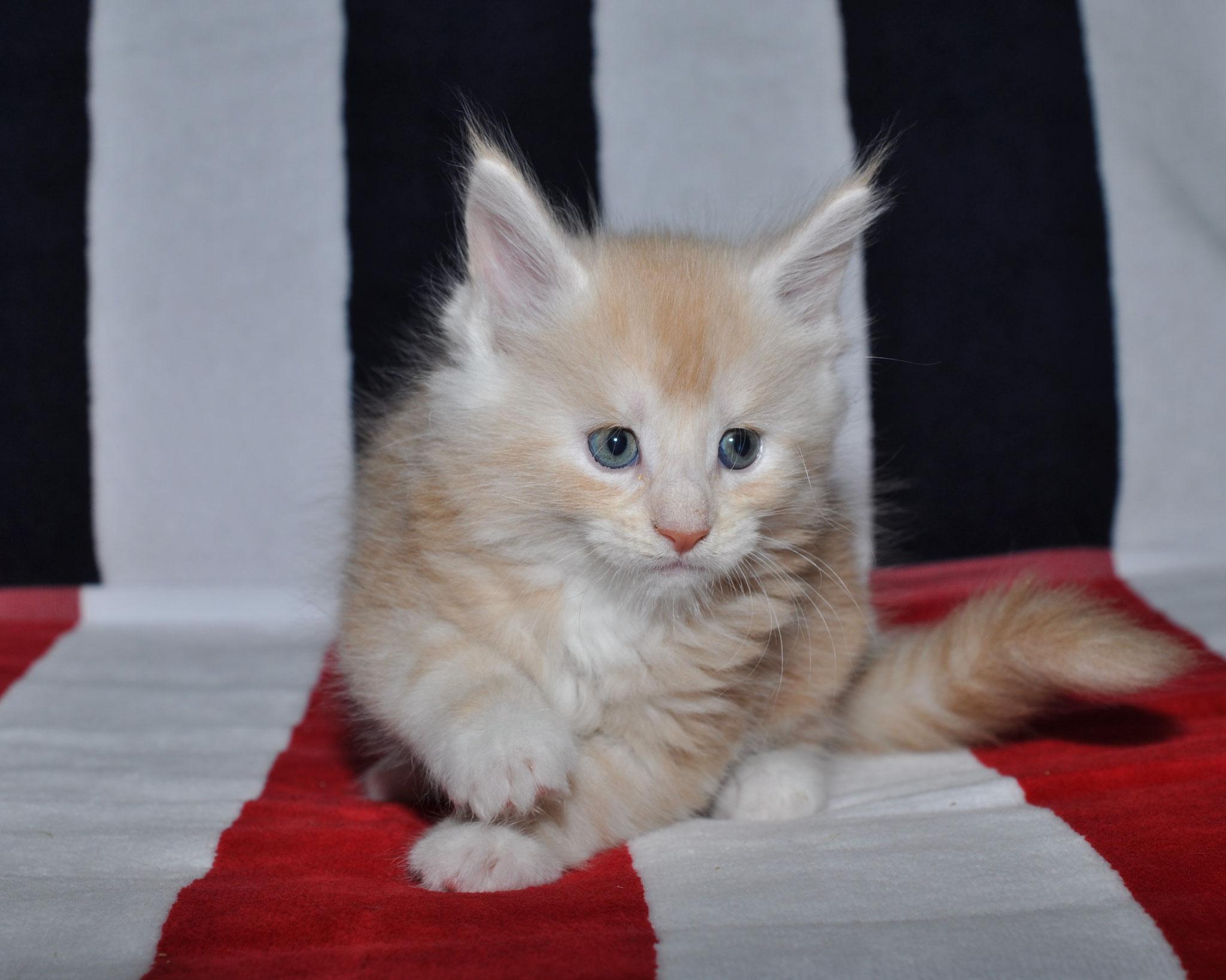 Kobi 5 weeks