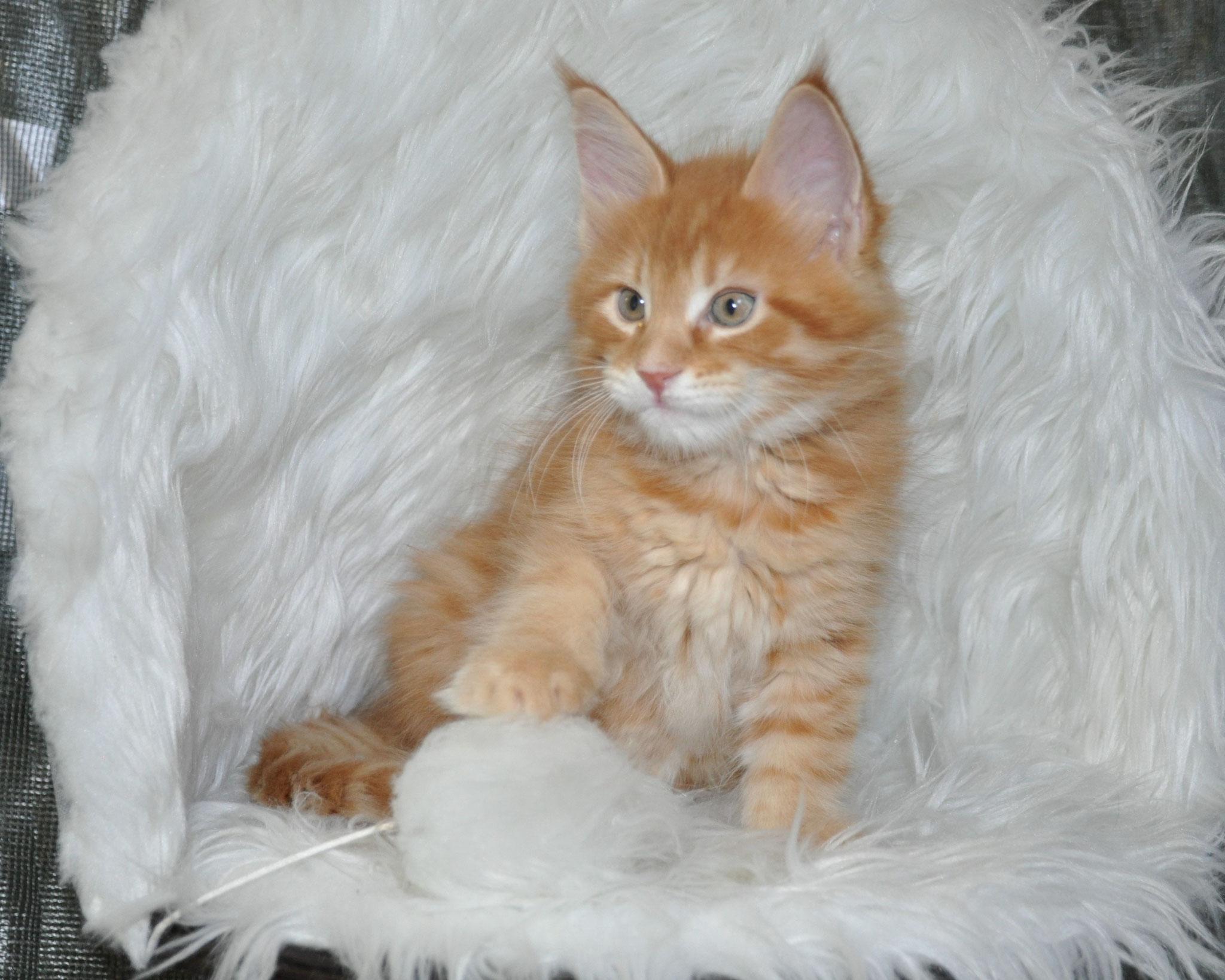 Dominic, 8 weeks