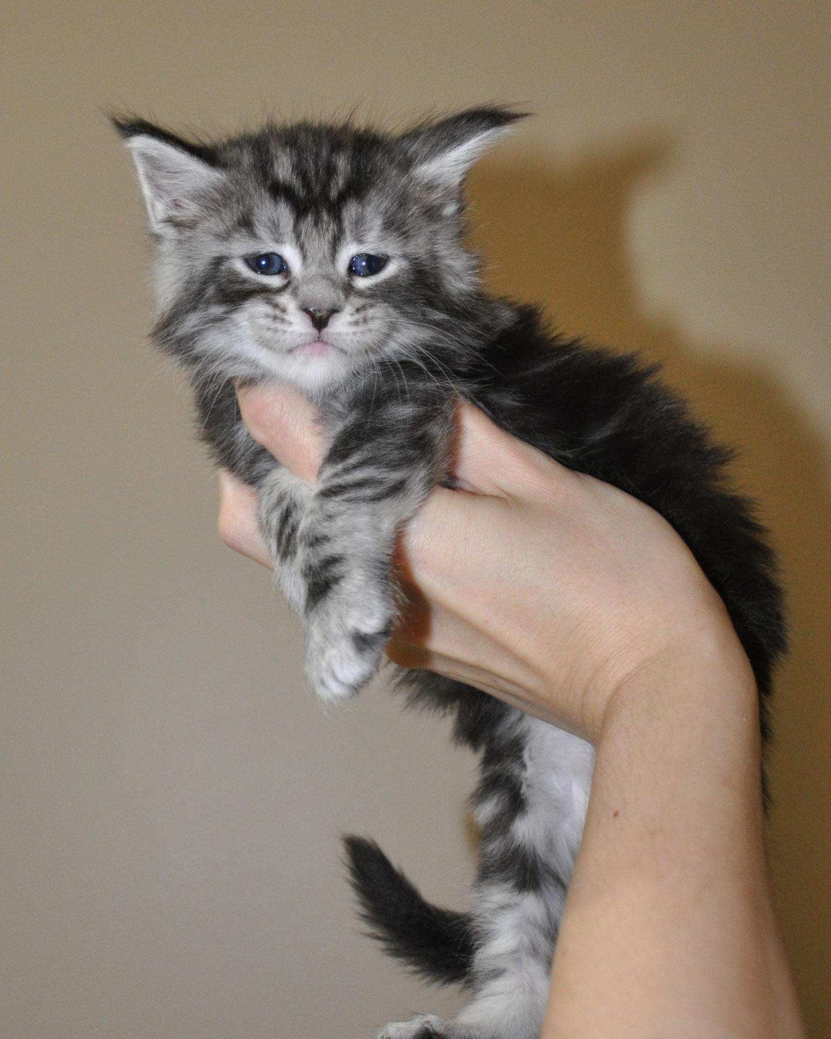 Eva, 4 weeks