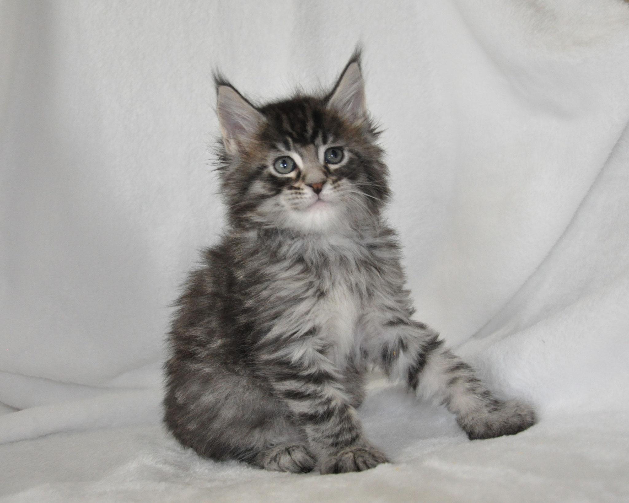Ezra, 6 weeks