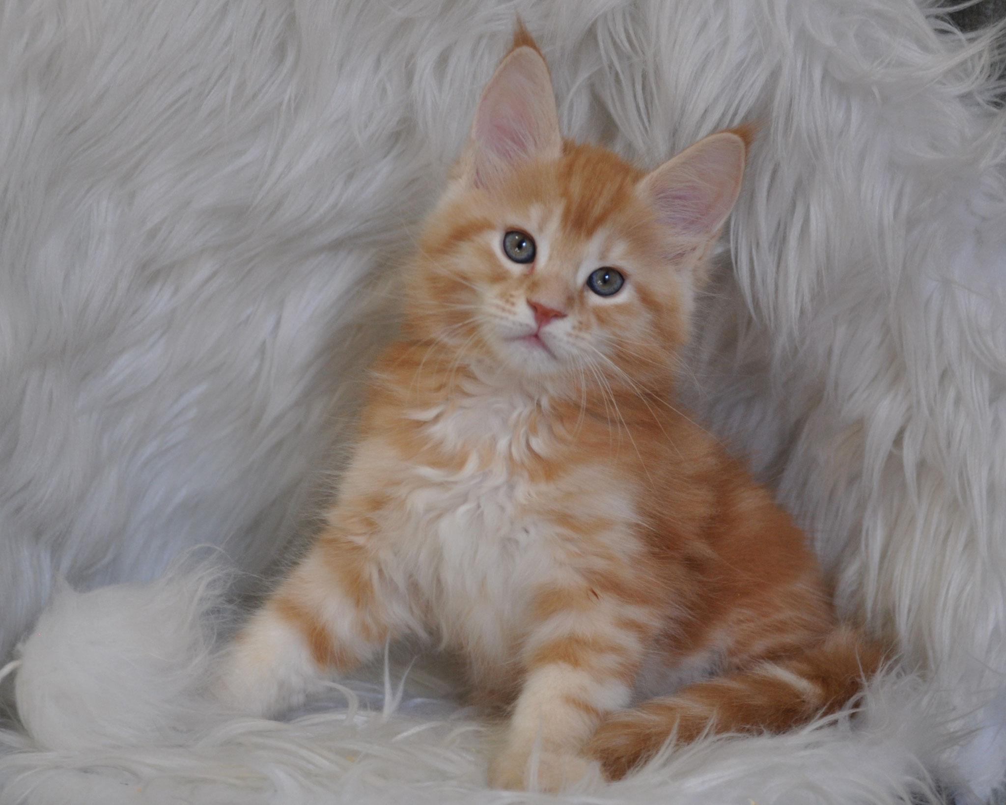 Dimitri, 8 weeks