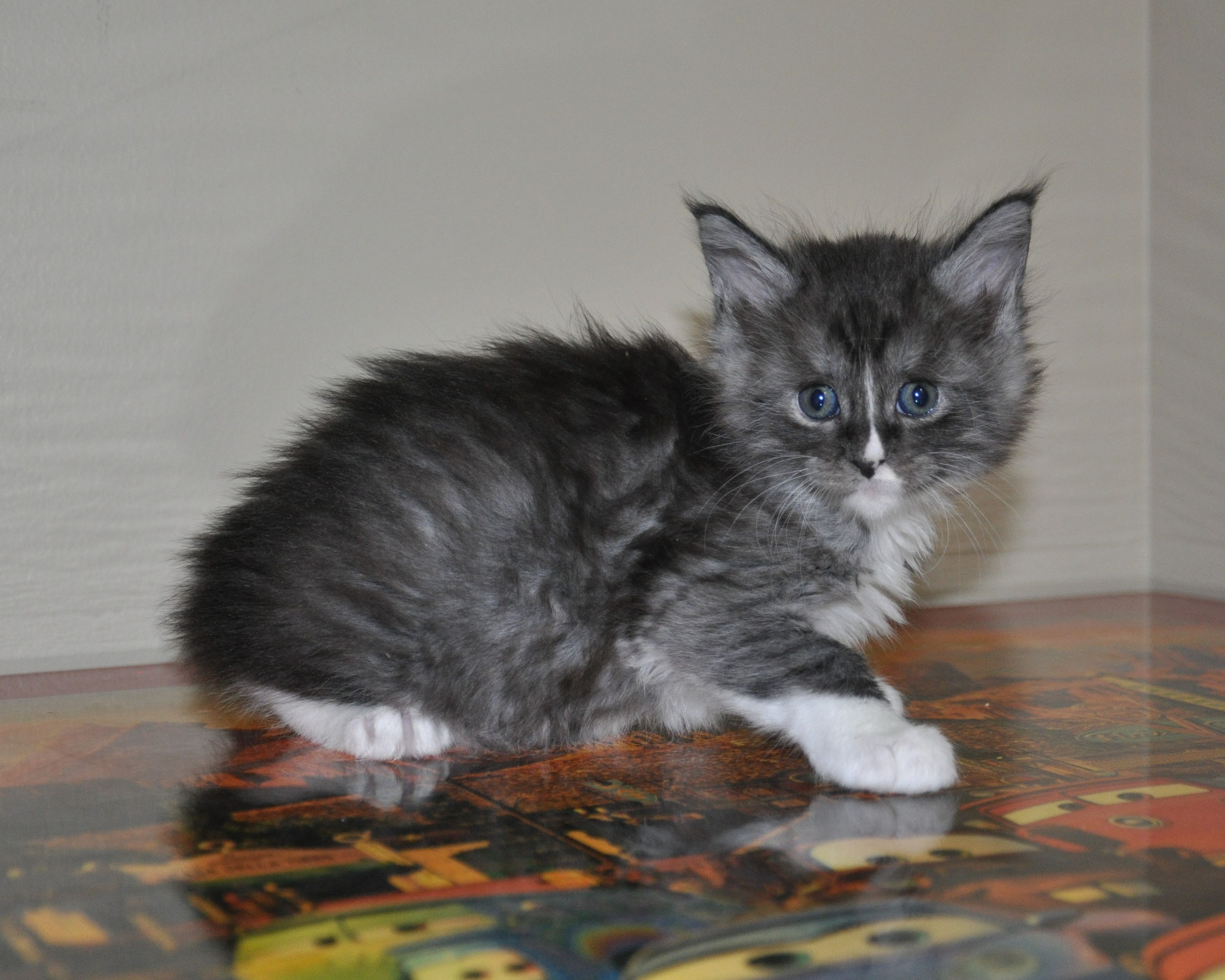Electra, 5 weeks