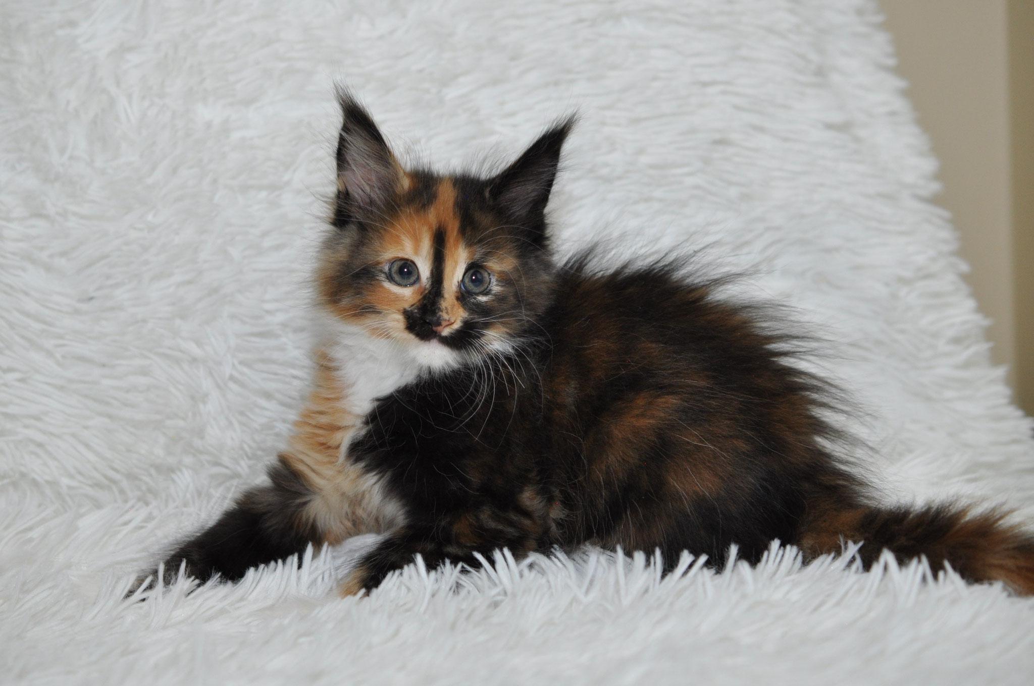 Kalinka 7 weeks
