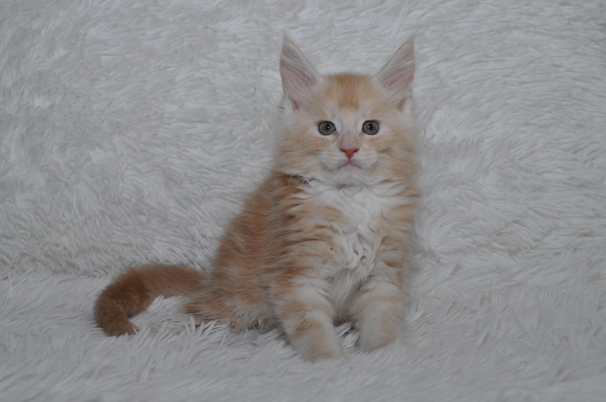 Kobi 7 weeks