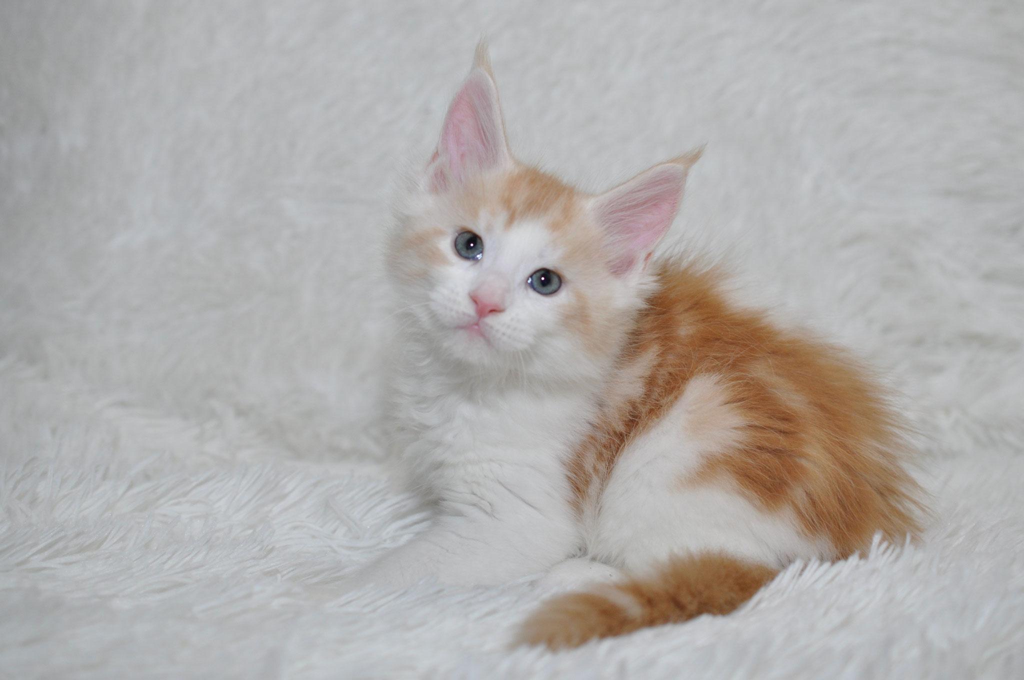 Kikilo 7 weeks