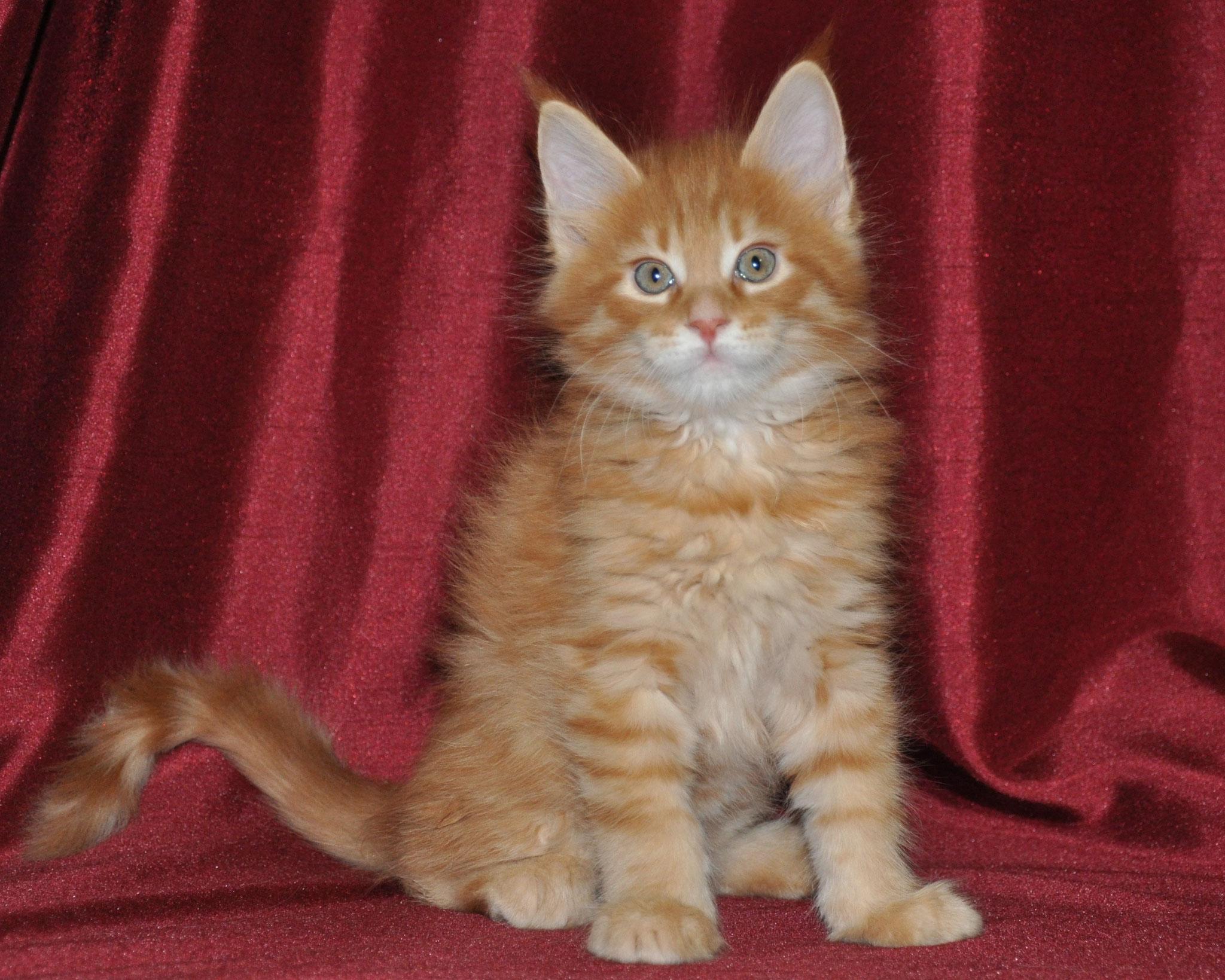 Dominic, 7 weeks