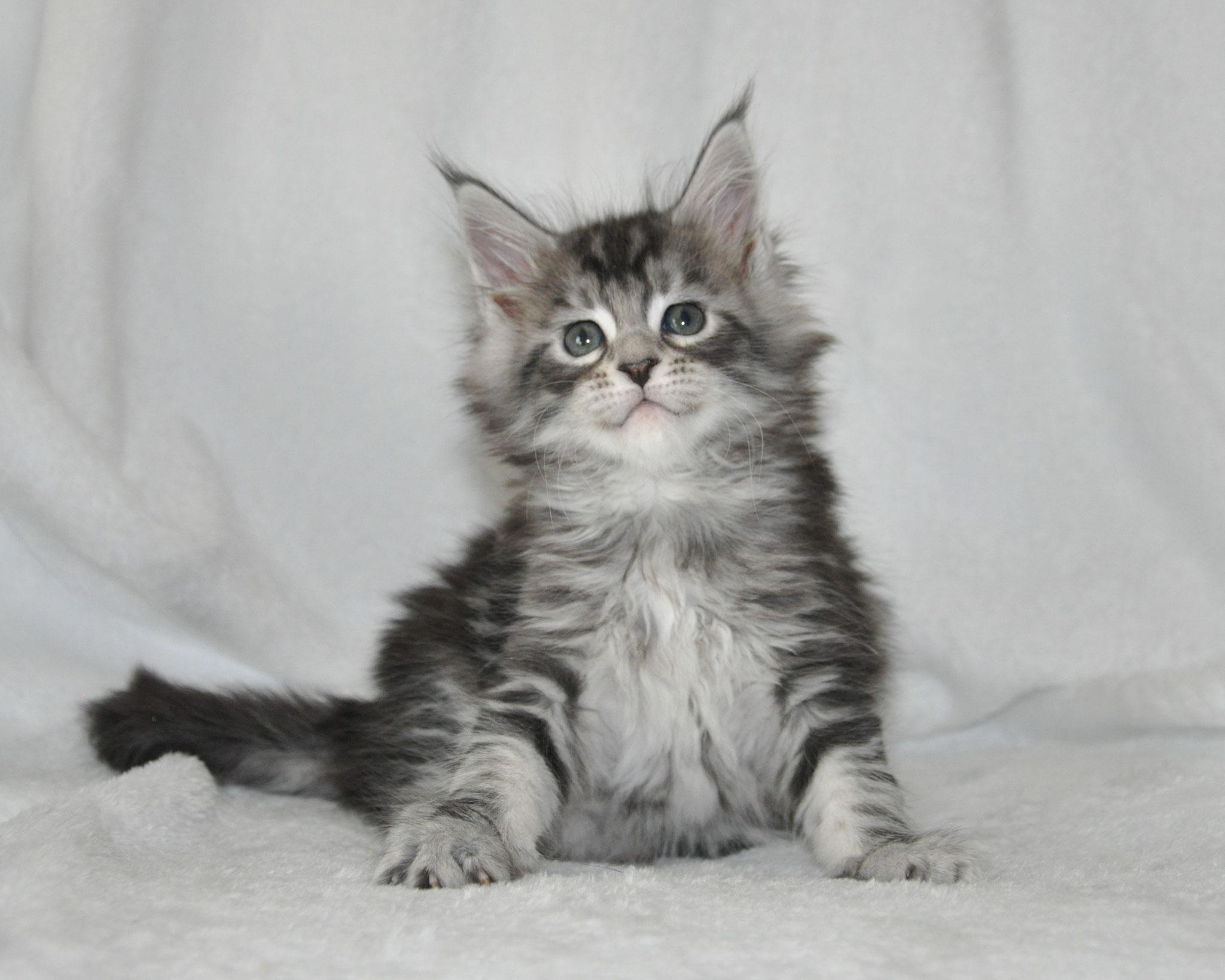 Eva, 6 weeks