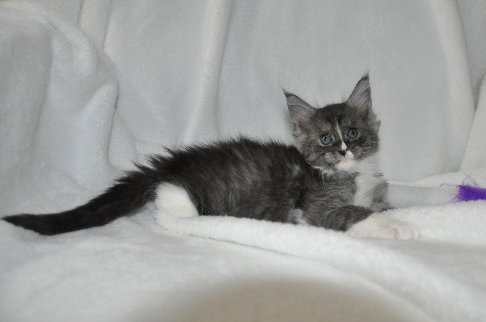 Electra, 6 weeks