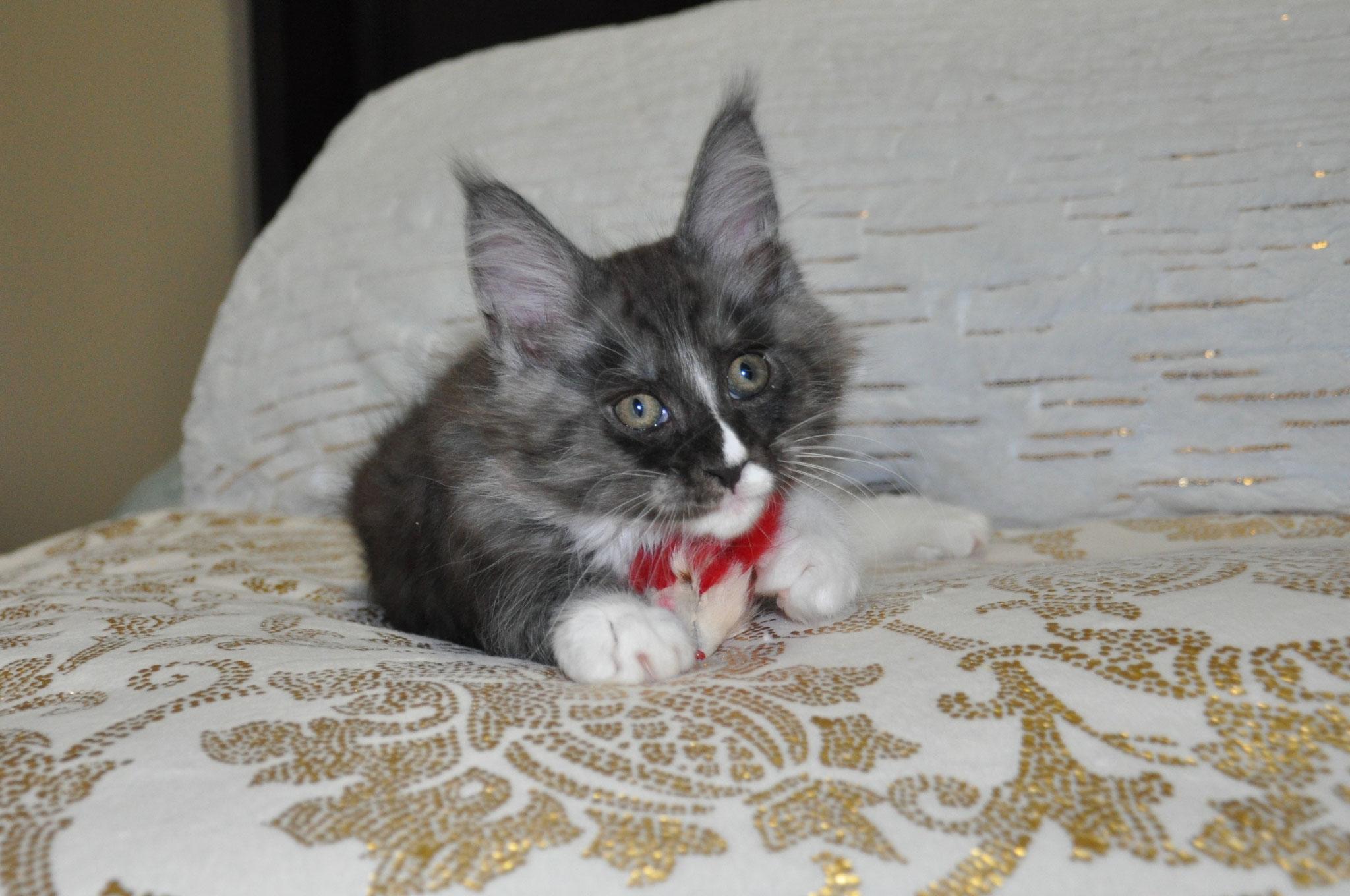Electra, 10 weeks