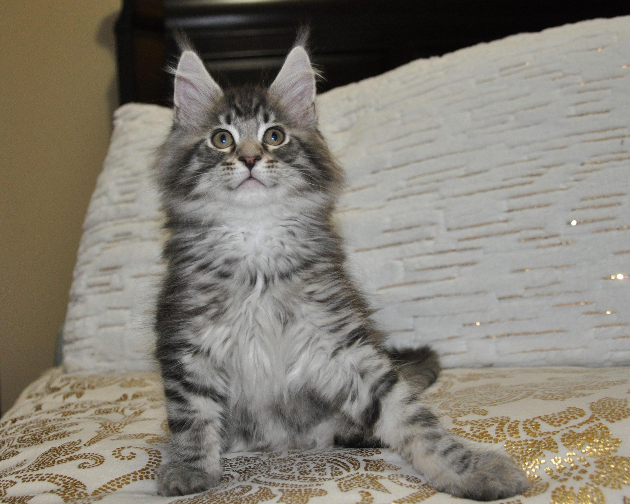 Ezra, 10 weeks