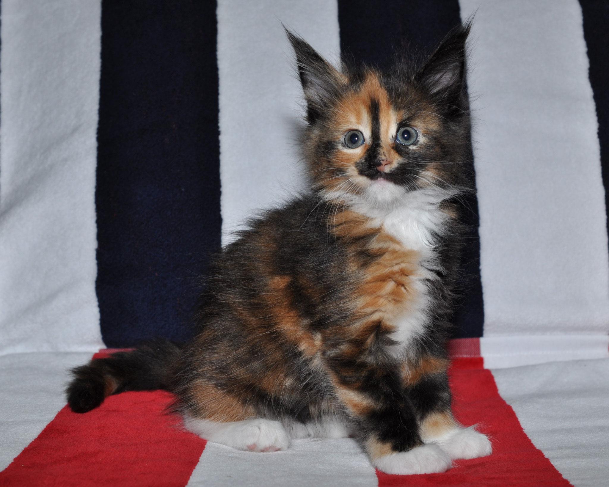 Kalinka 5 weeks
