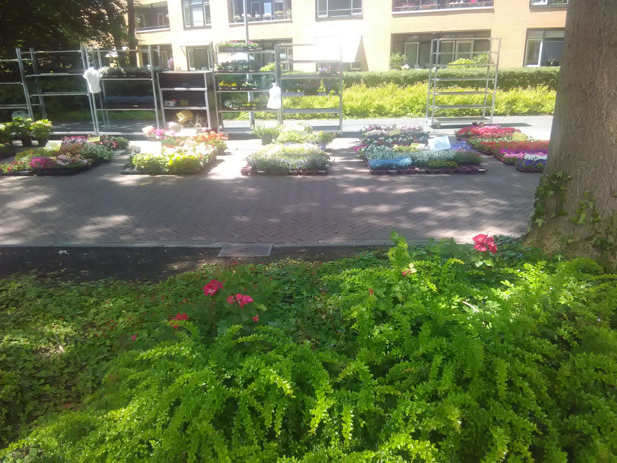 Bloemen- en Plantenhandel D.Albers