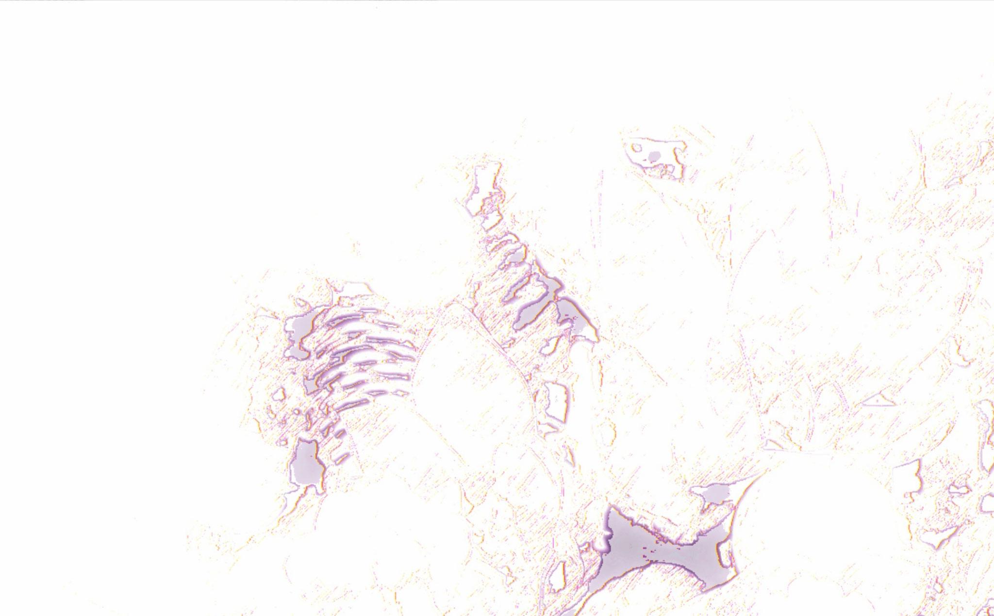 Achtergrond, bloemstuk met dennenappels.