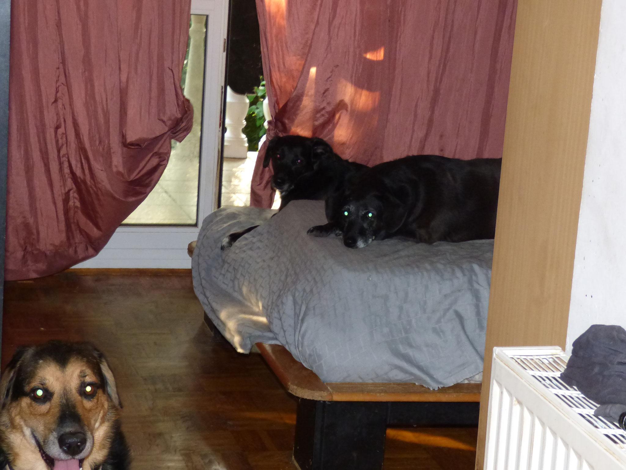 Aufgrund fehlender Außenplätze haben 10 Hunde und bis zu 100 Katzen ihr Haus belagert