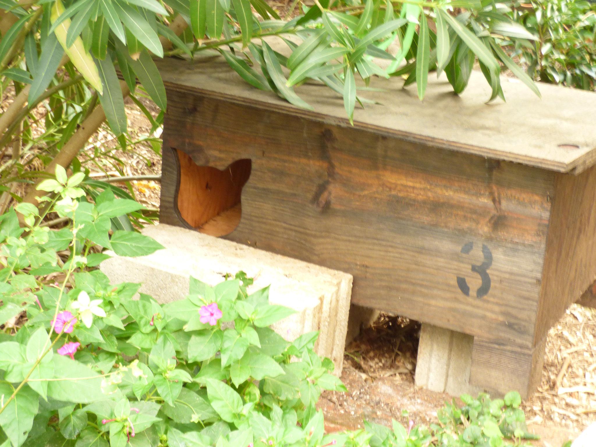 Auch für ein Katzendorf ist genügend Platz, es fehlt einzig an den finanziellen Mitteln