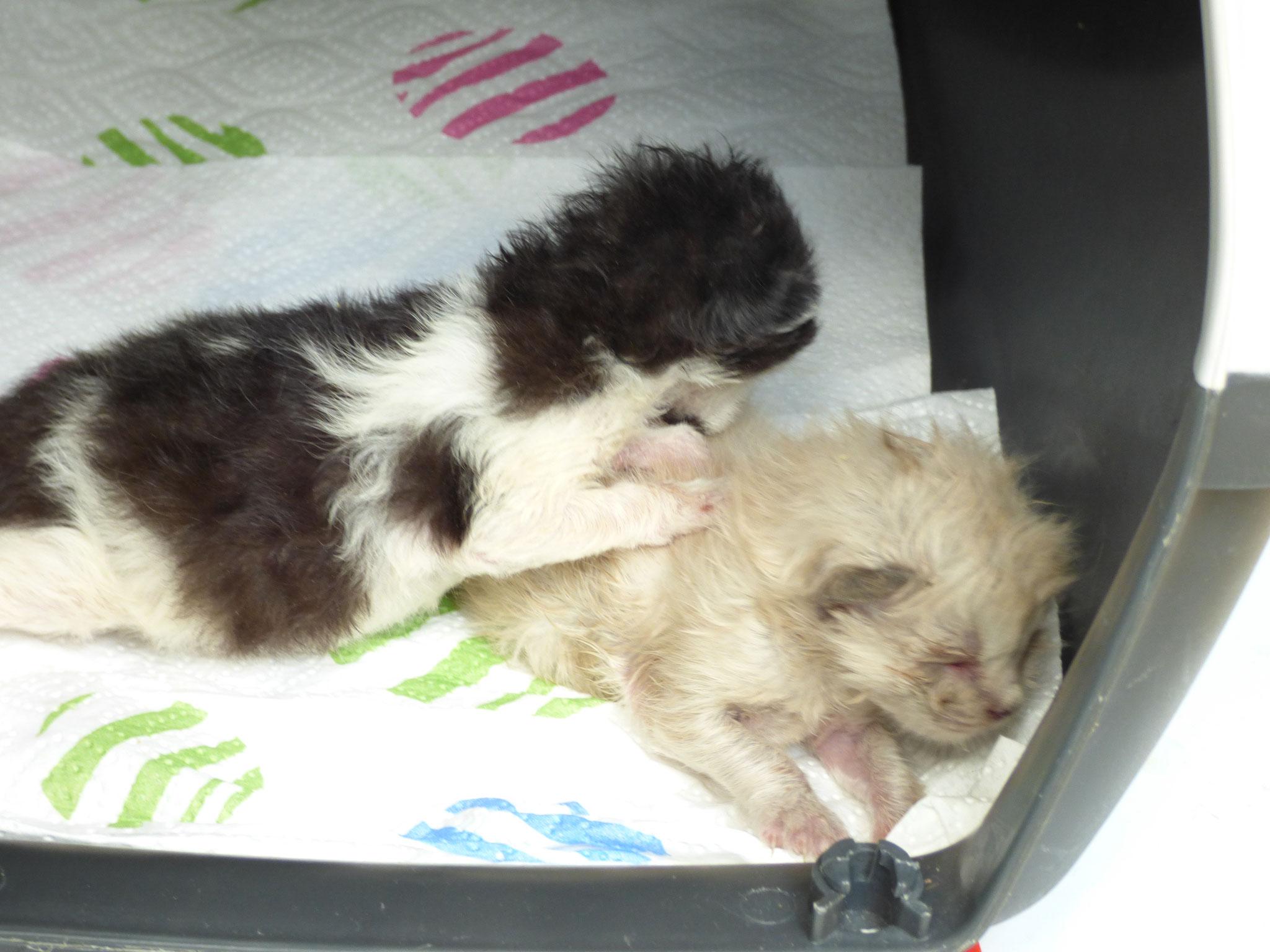Kleine Hunde und Katzen Babys werden einfach ausgesetzt, vergiftet oder erschlagen.