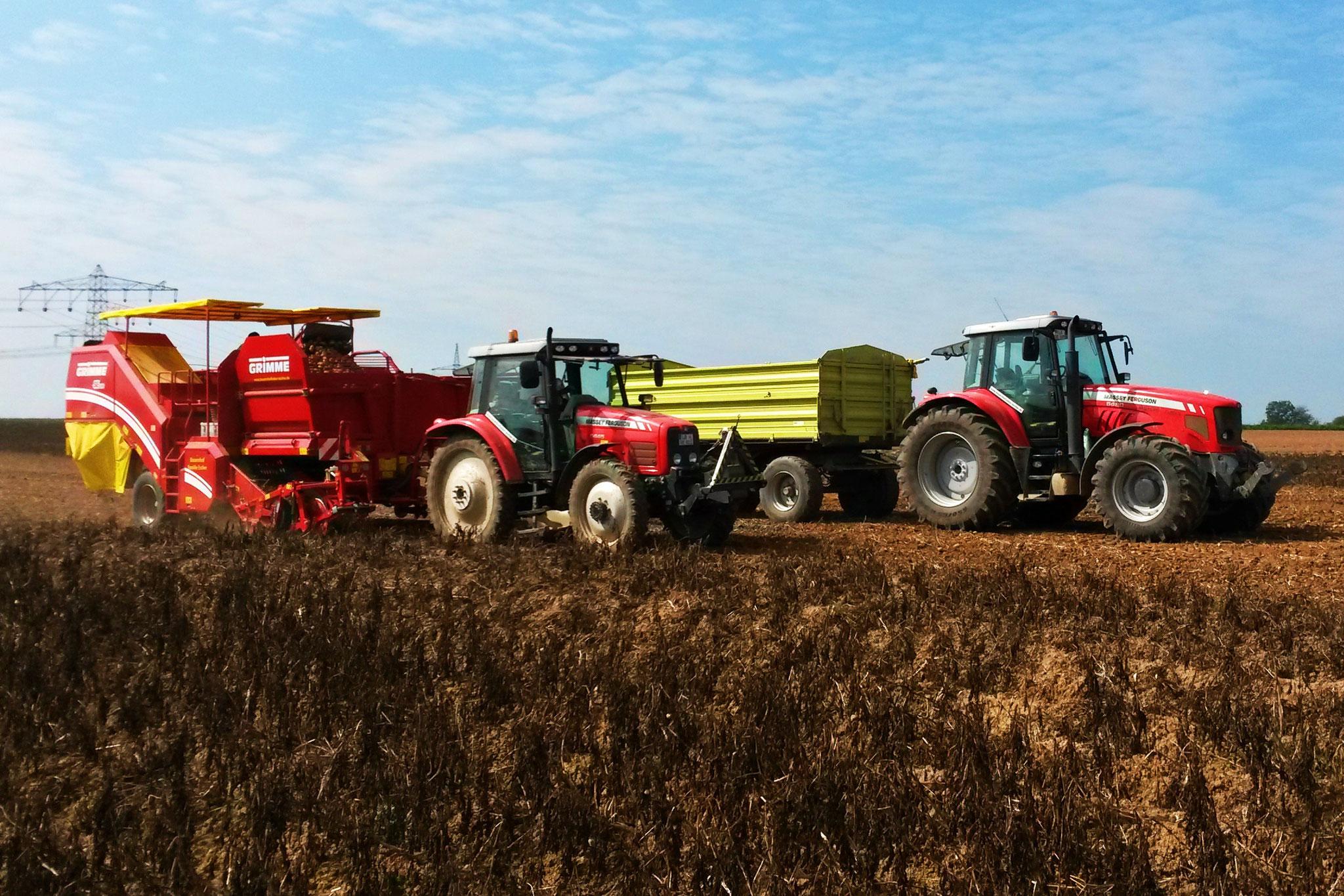 Grimme Kartoffelvollernter mit Massey Ferguson 5445, Massey Ferguson 6480 mit Wagen