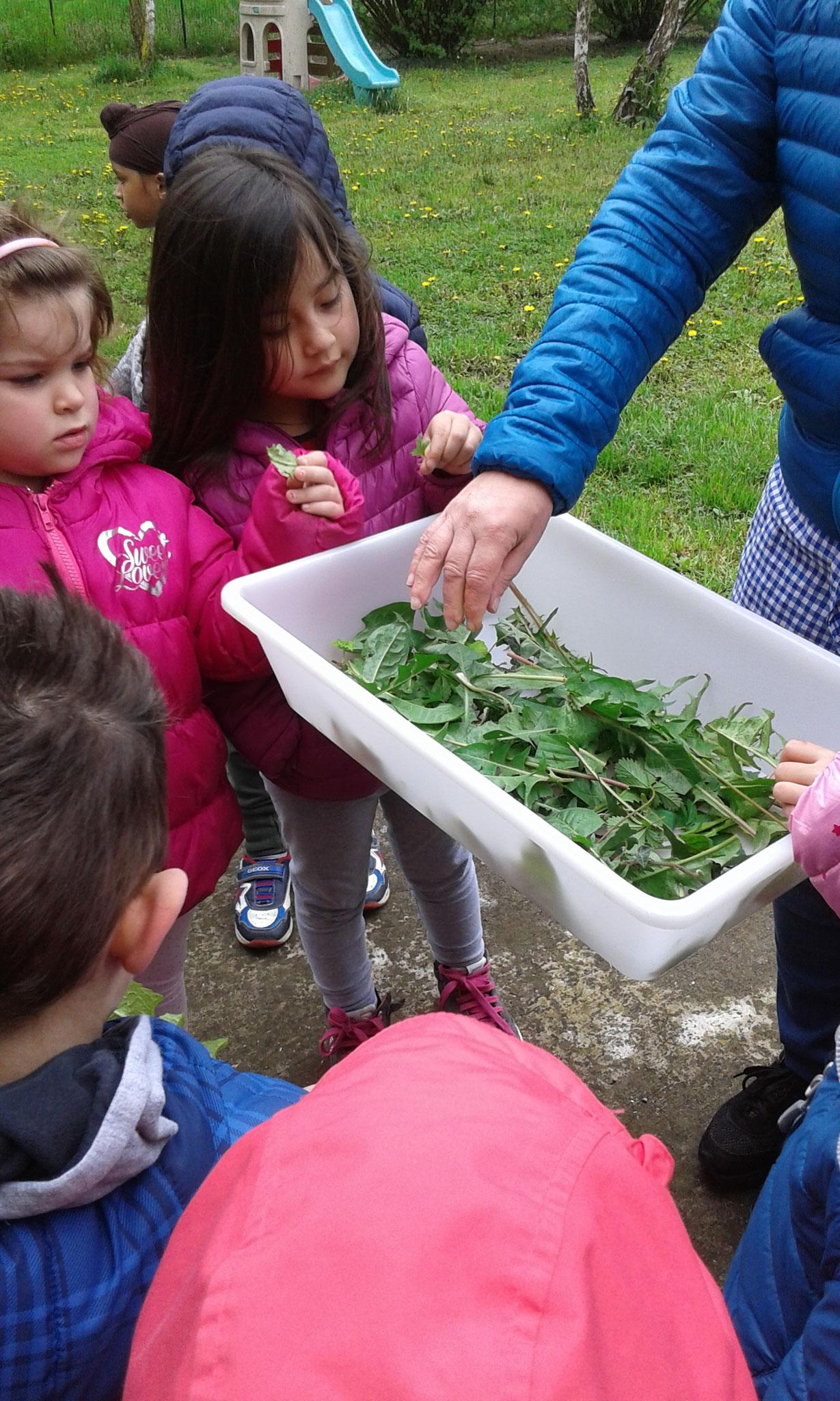 Raccogliamo nel giardino della scuola tante foglie