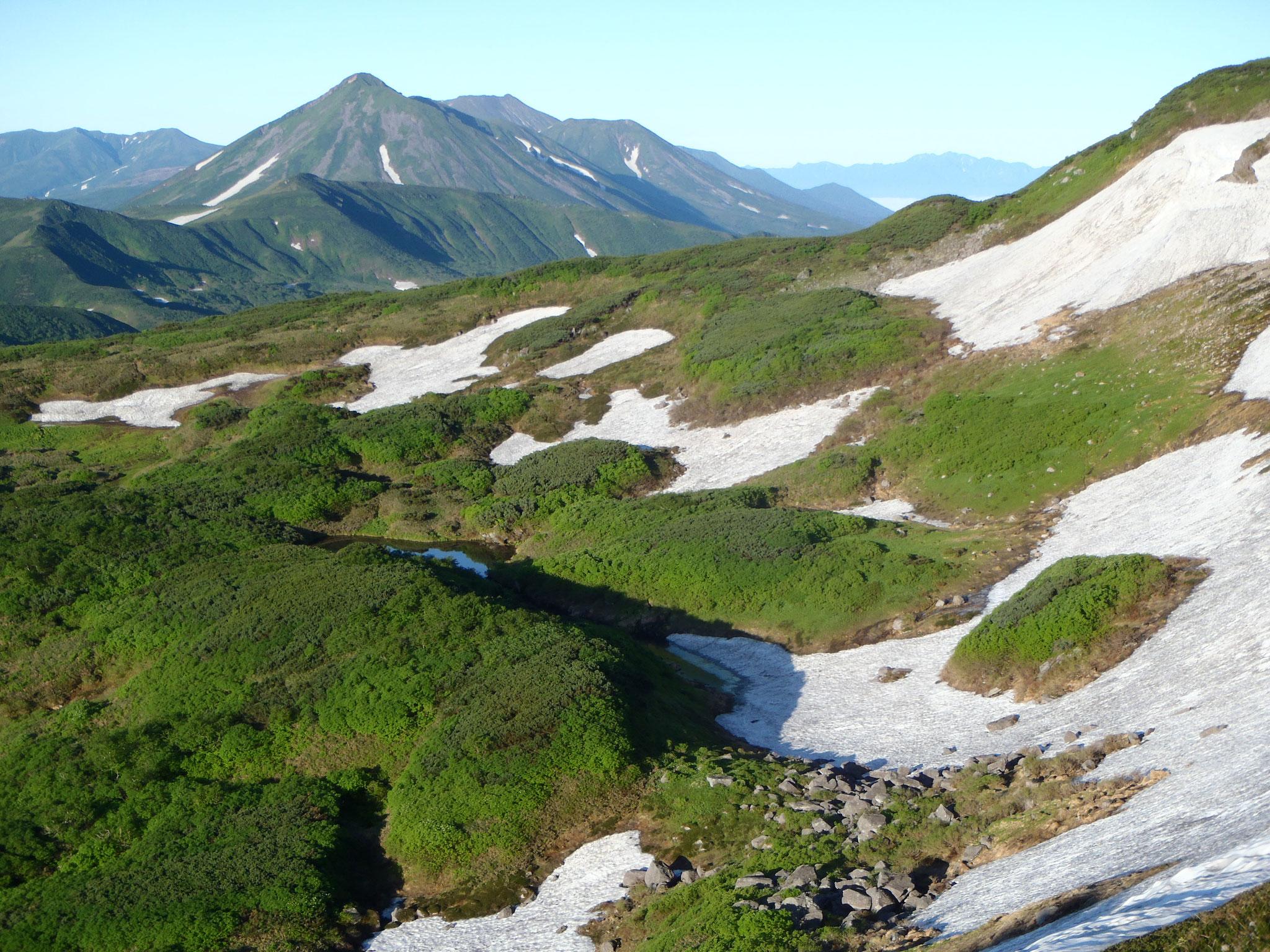 オプタテシケ山遠望 7月