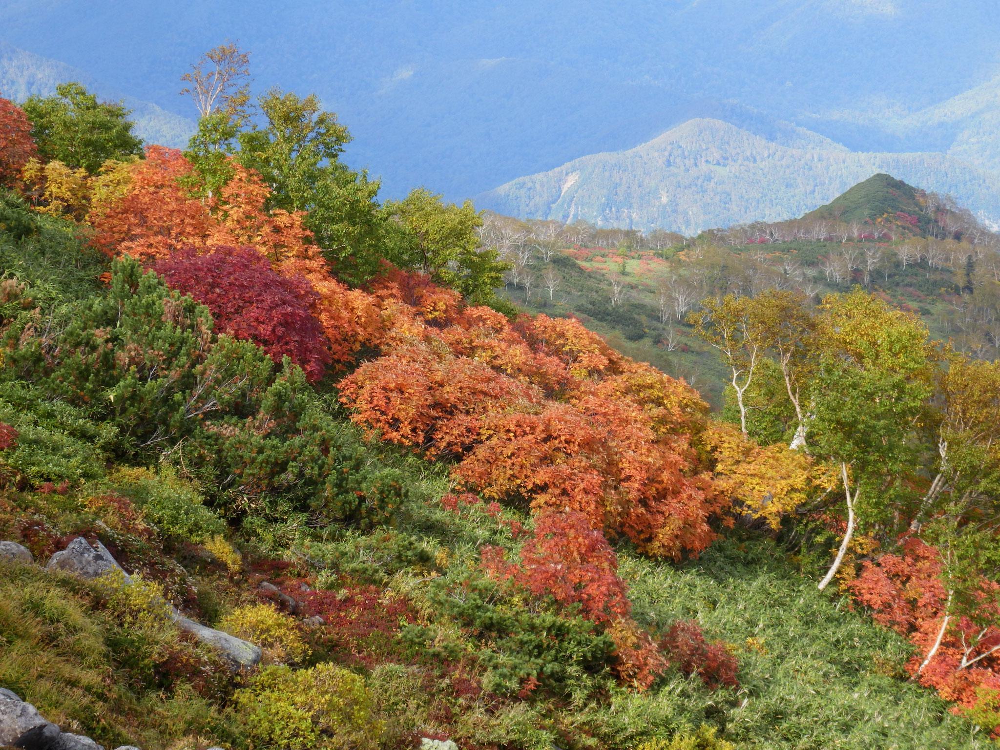 日本一早い紅葉 大雪山9月